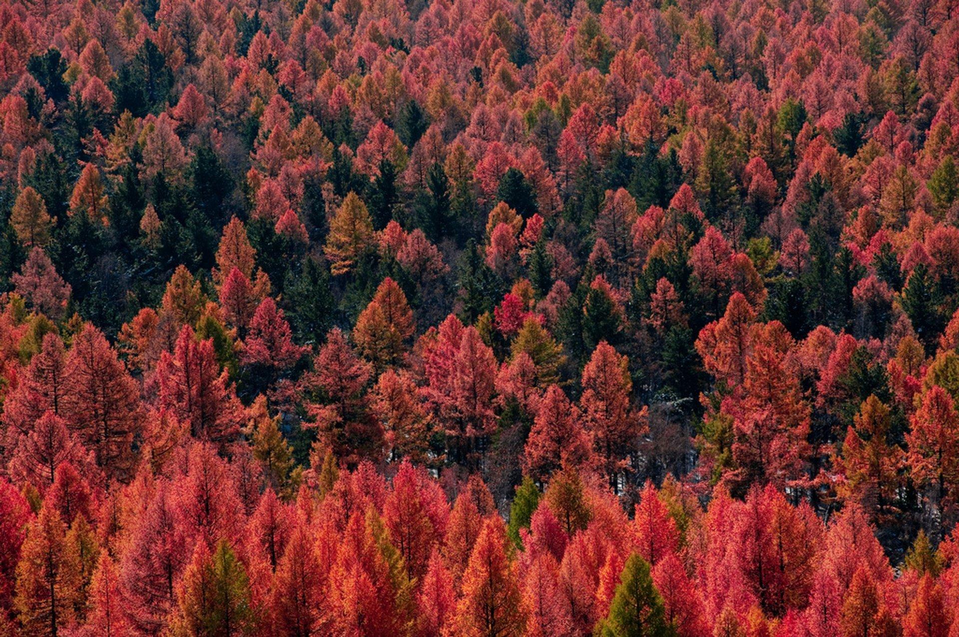 Autumn Colours in Mongolia - Best Season 2019