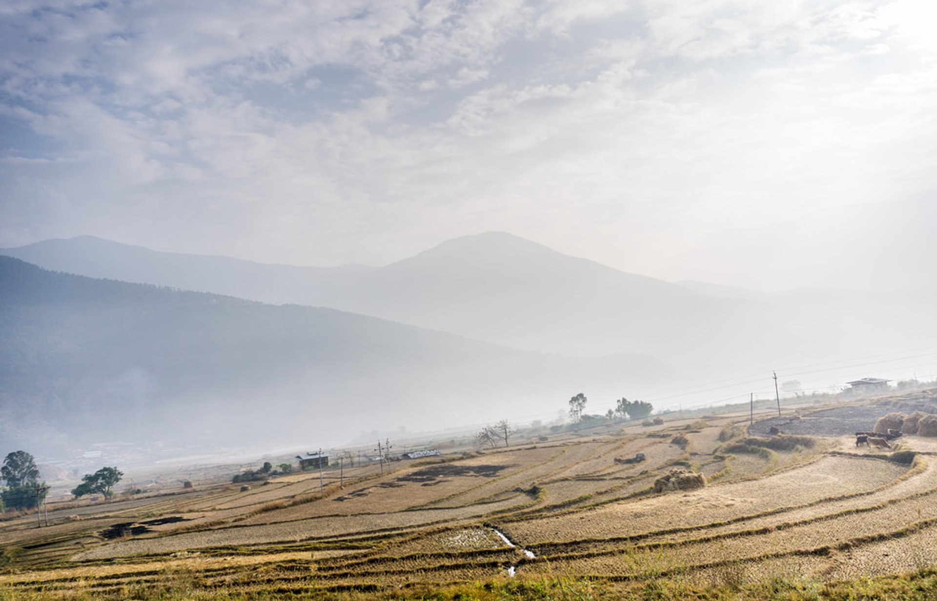 Best time for Rice Harvest in Bhutan 2019