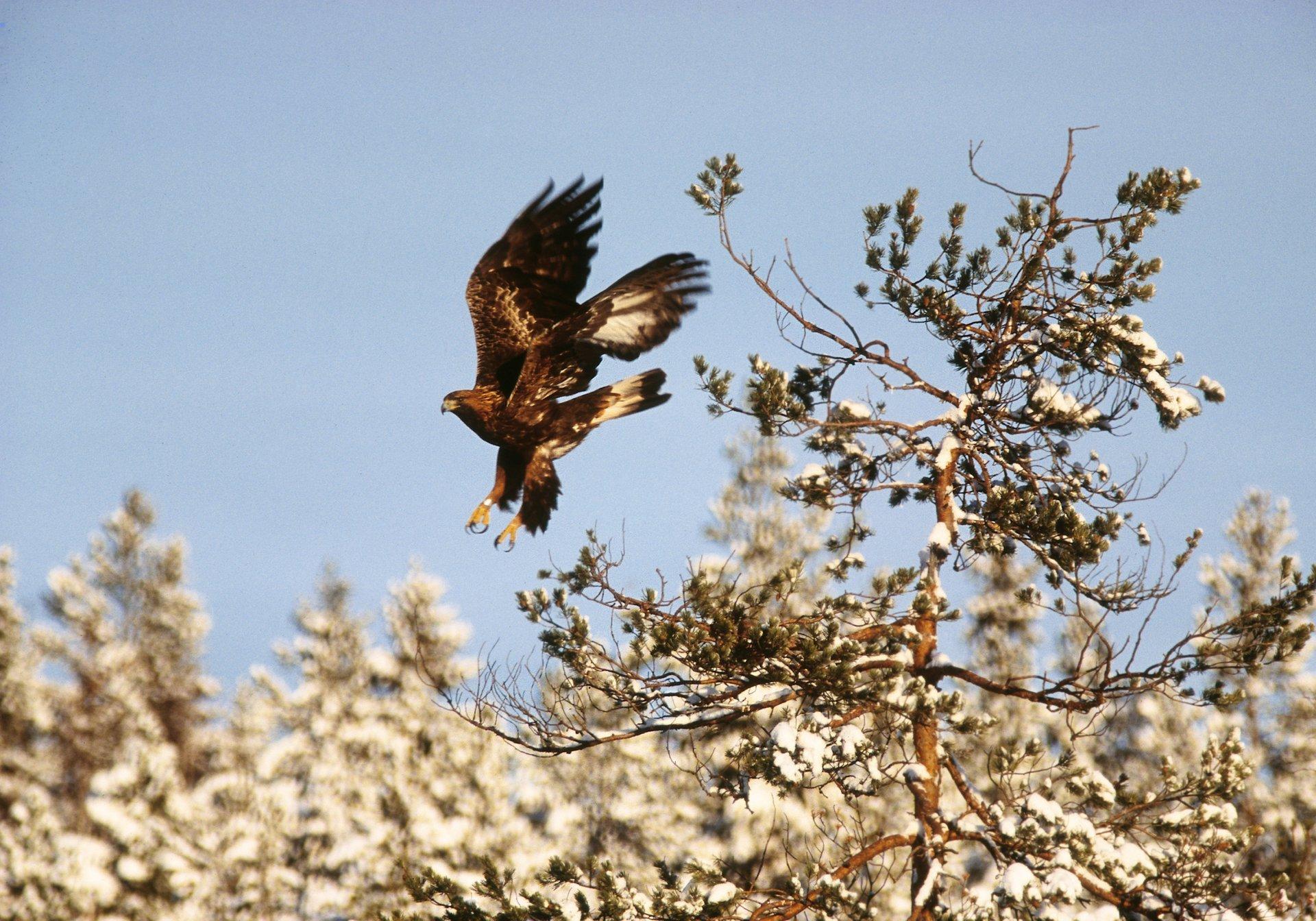 Birdwatching in Sweden 2020 - Best Time