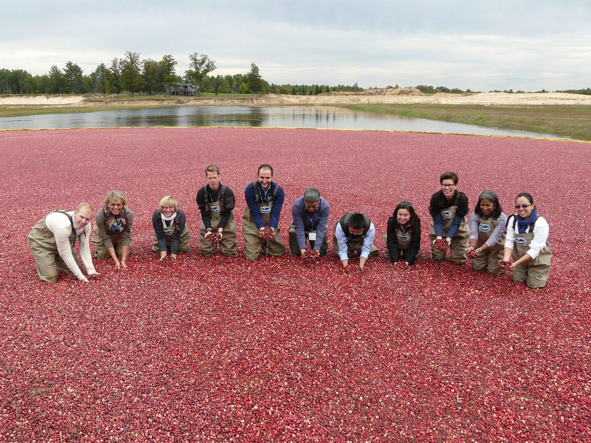 Best time for Wisconsin Cranberry Harvest in Midwest 2020