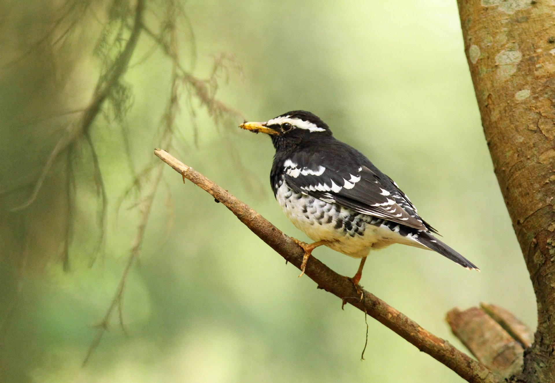 Birdwatching in Sri Lanka 2020 - Best Time