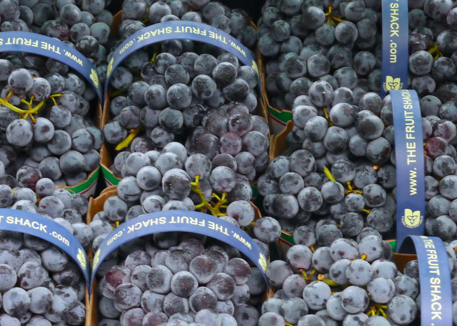 Best time for Grape (Wine) Harvest in Niagara Falls