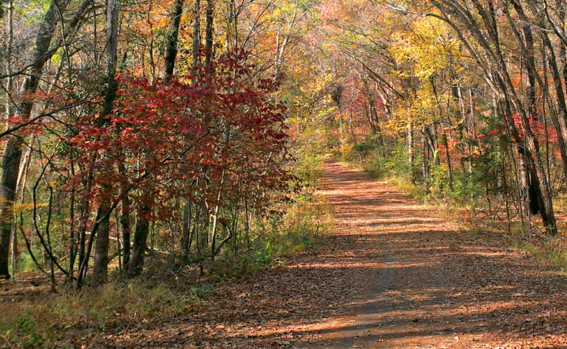 Autumn road in Tyler State Park, East Texas 2020