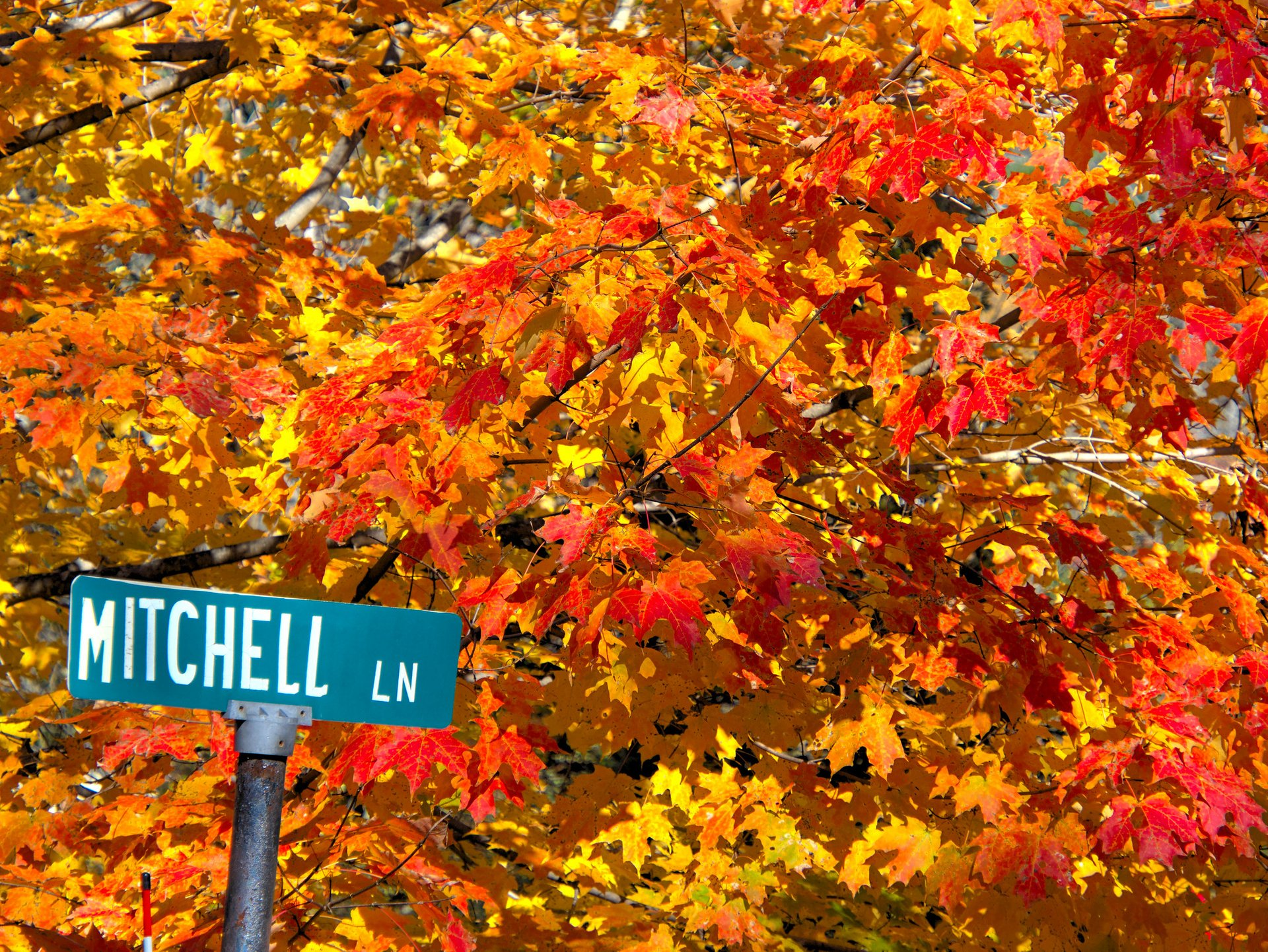 Mitchell Lane in Hanover, NH 2020
