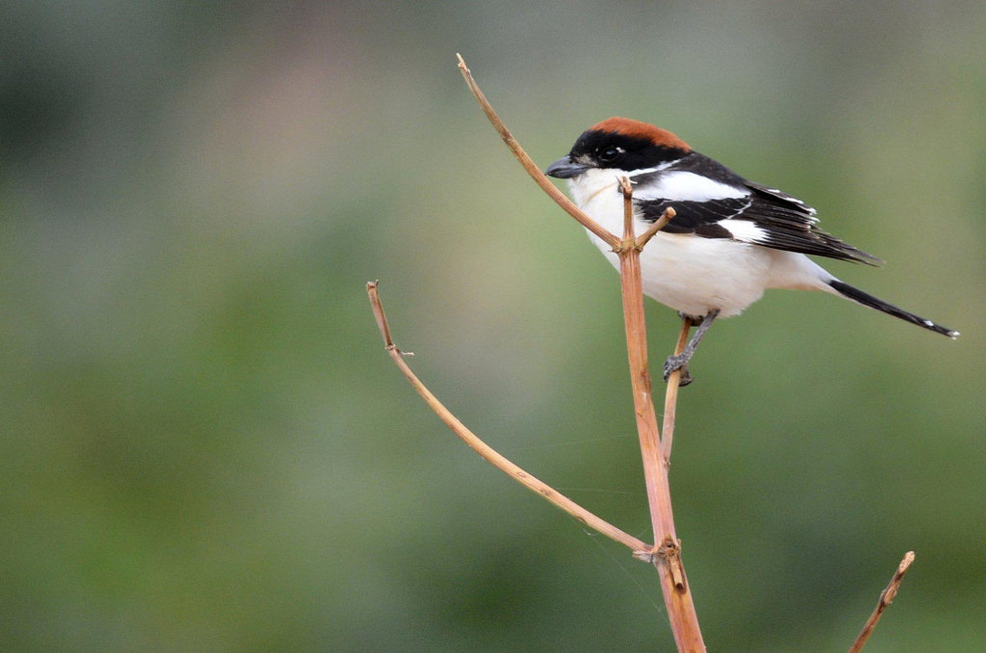 Birdwatching in Jordan 2019 - Best Time