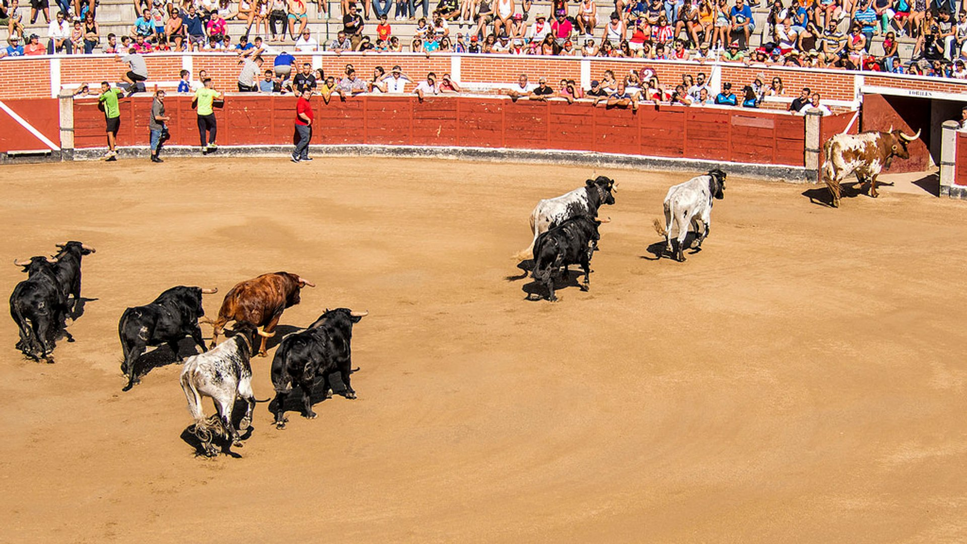Best time for Bullfighting (Corrida de Toros)