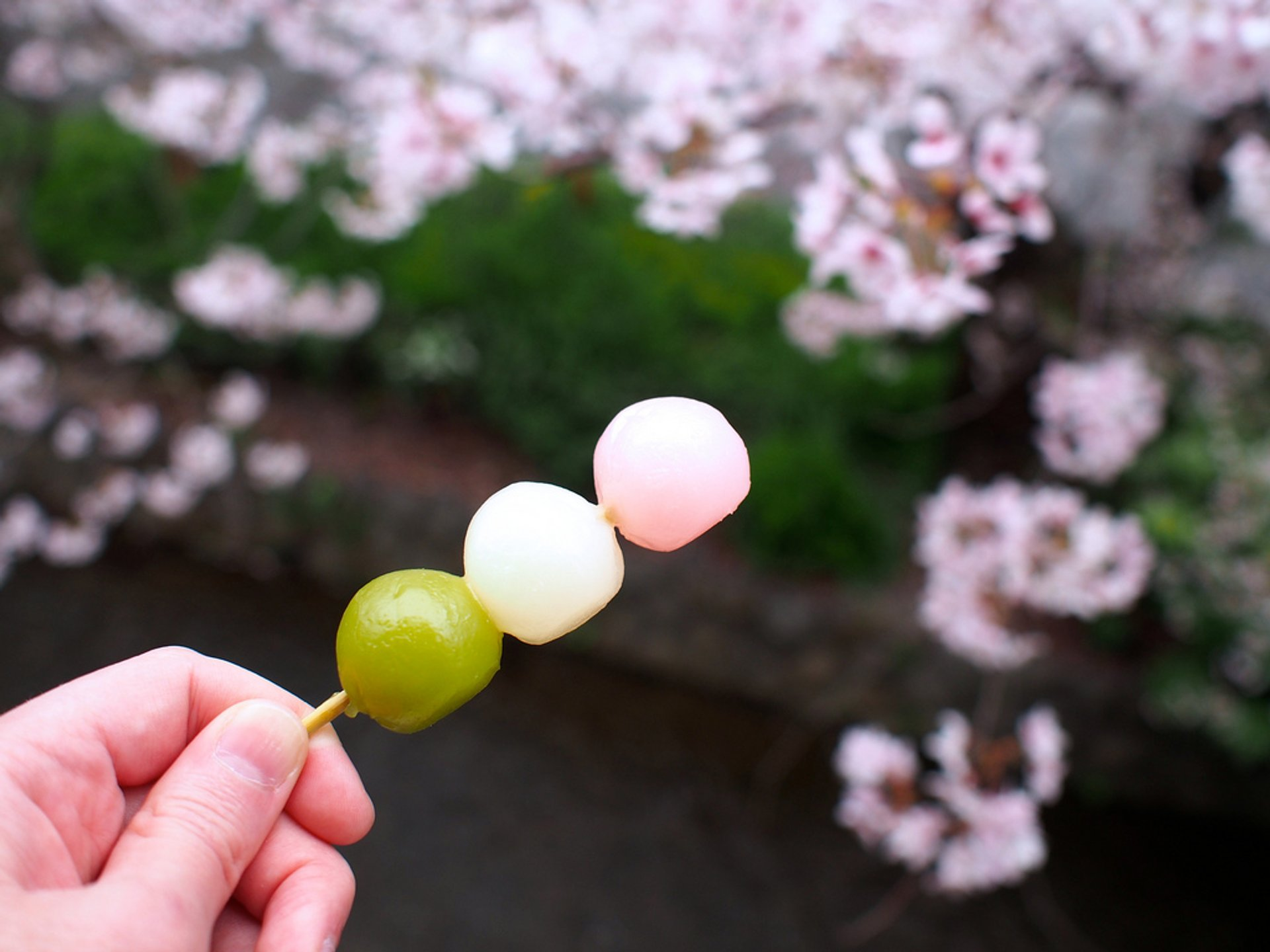 japanese street food dango
