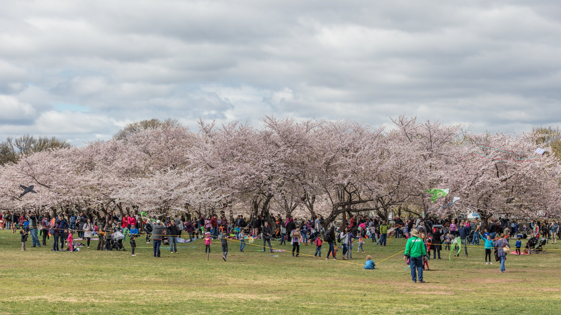 At the National Cherry Blossom Kite Festival 2020
