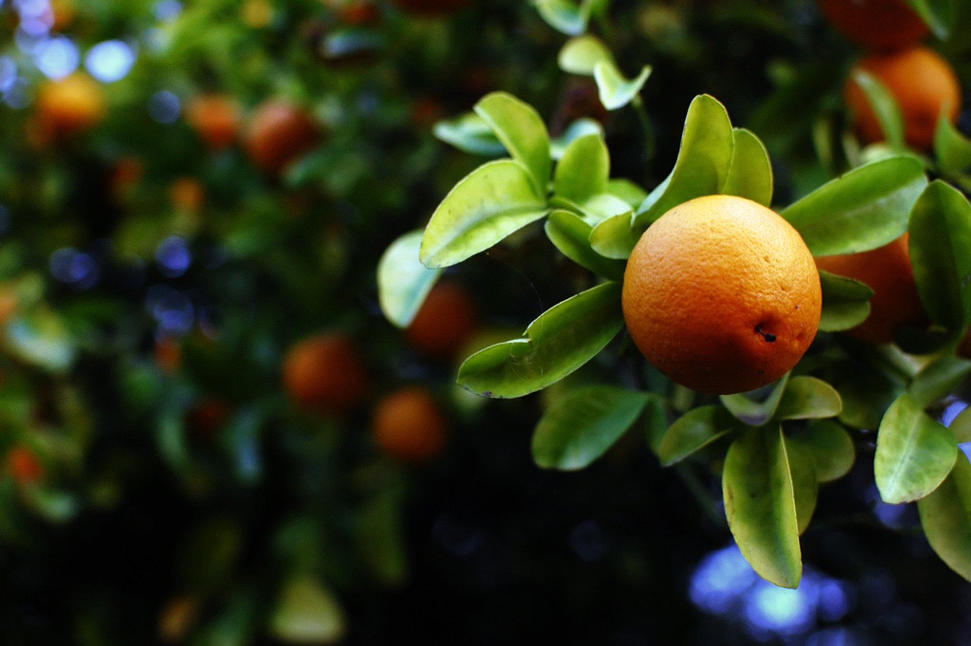 Orange Harvest in Canary Islands 2020 - Best Time