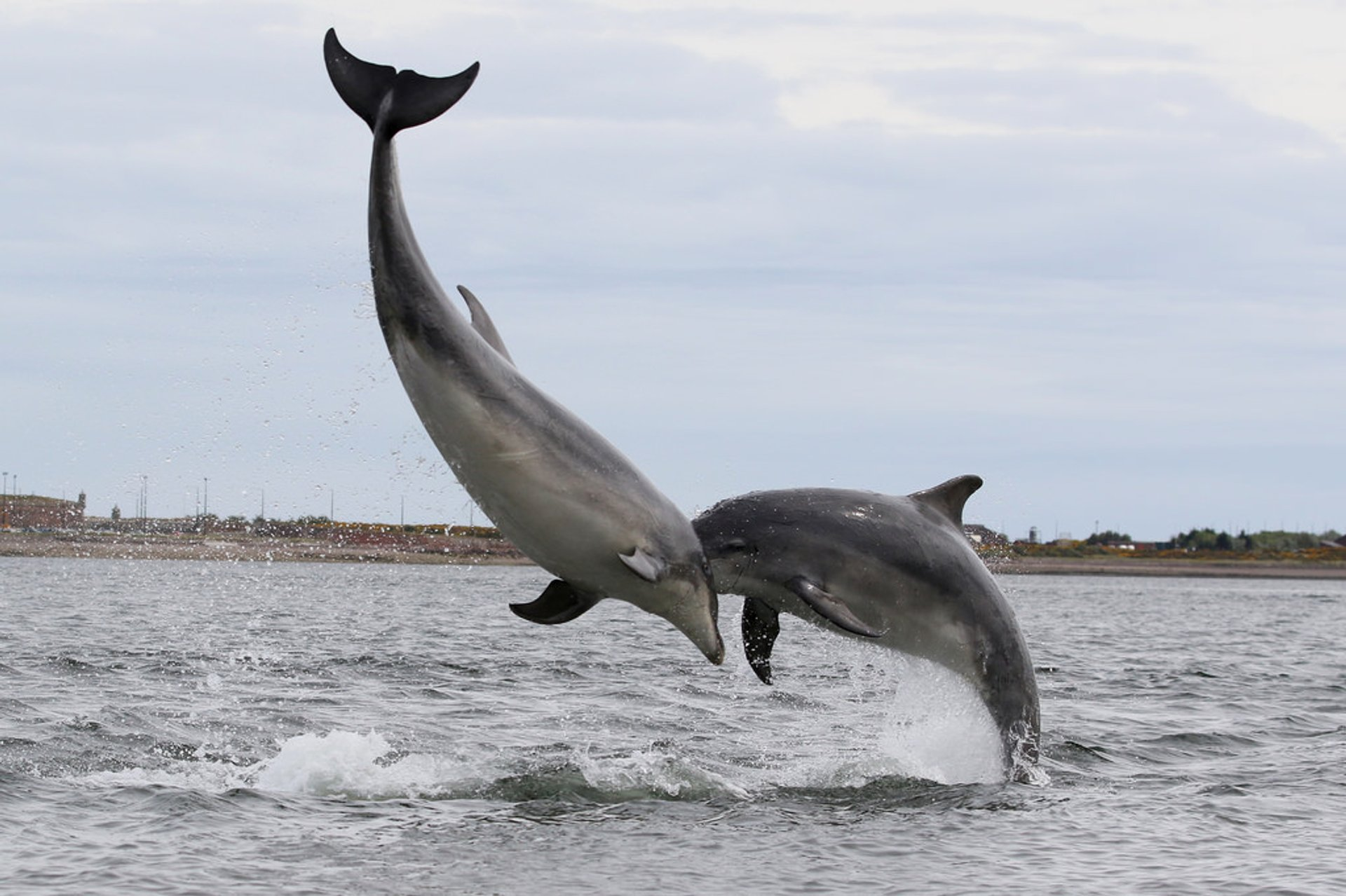 Dolphin and Whale Watching in Scotland in Scotland 2020 - Best Time