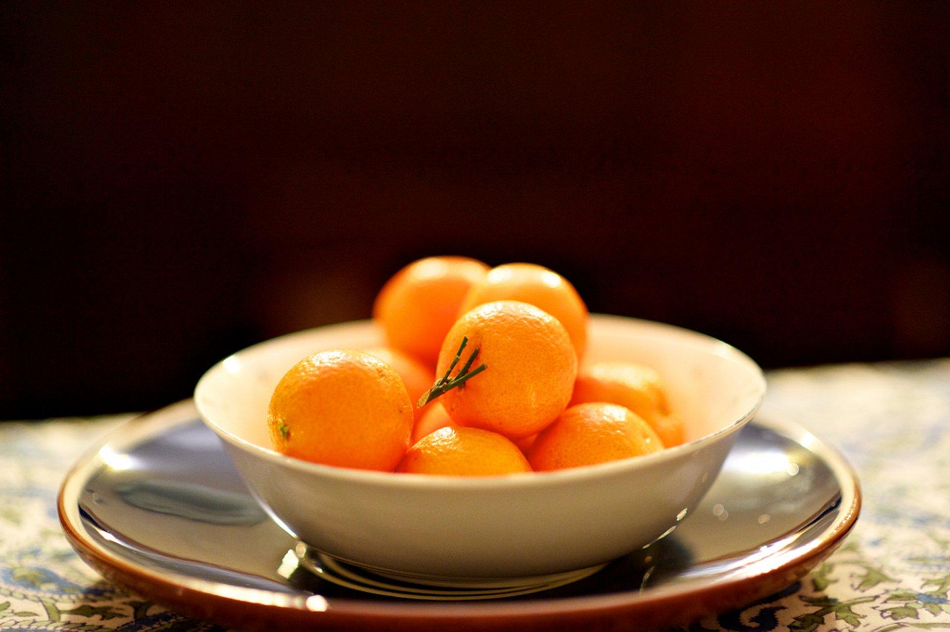 Corsican Clementines in Corsica - Best Season 2020