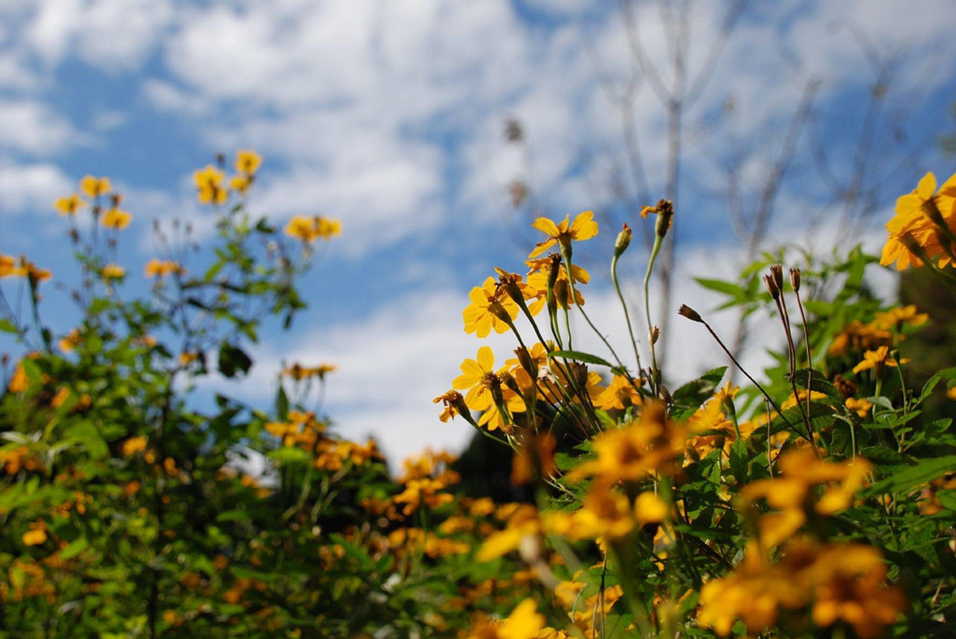 Best time for Yangmingshan Flower Season in Taiwan 2020