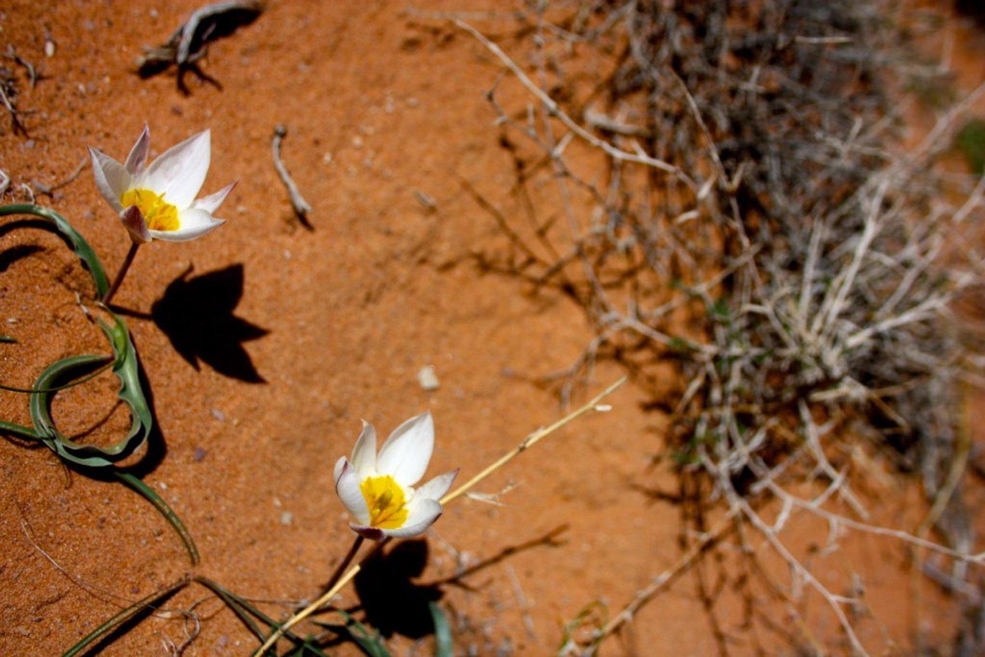 Wadi Rum Desert in Bloom in Jordan - Best Season 2020