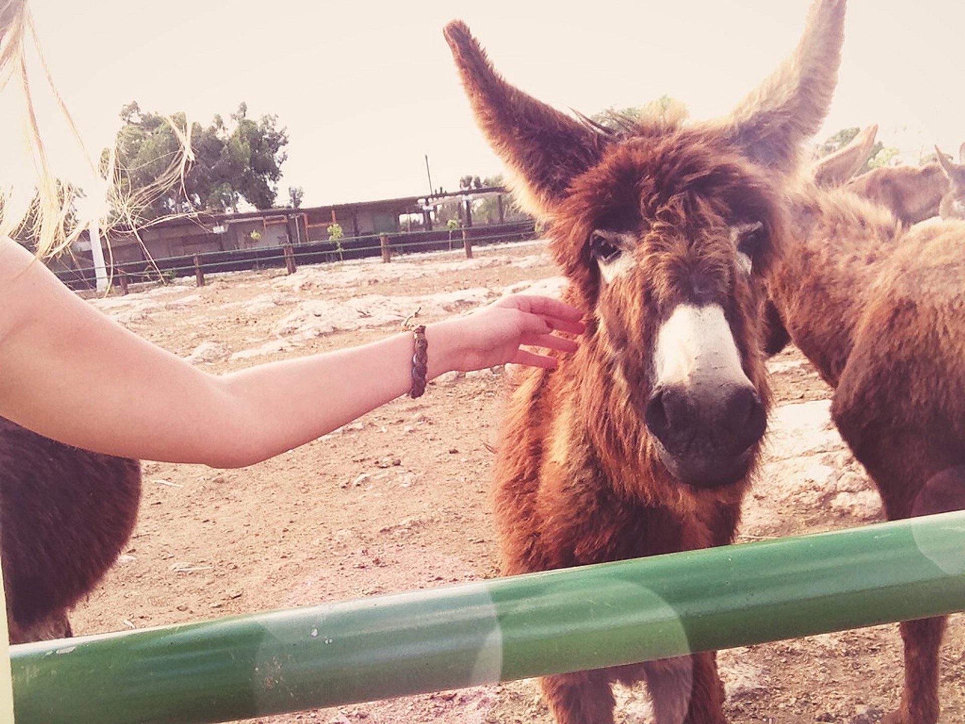 Donkeys in Cyprus - Best Time