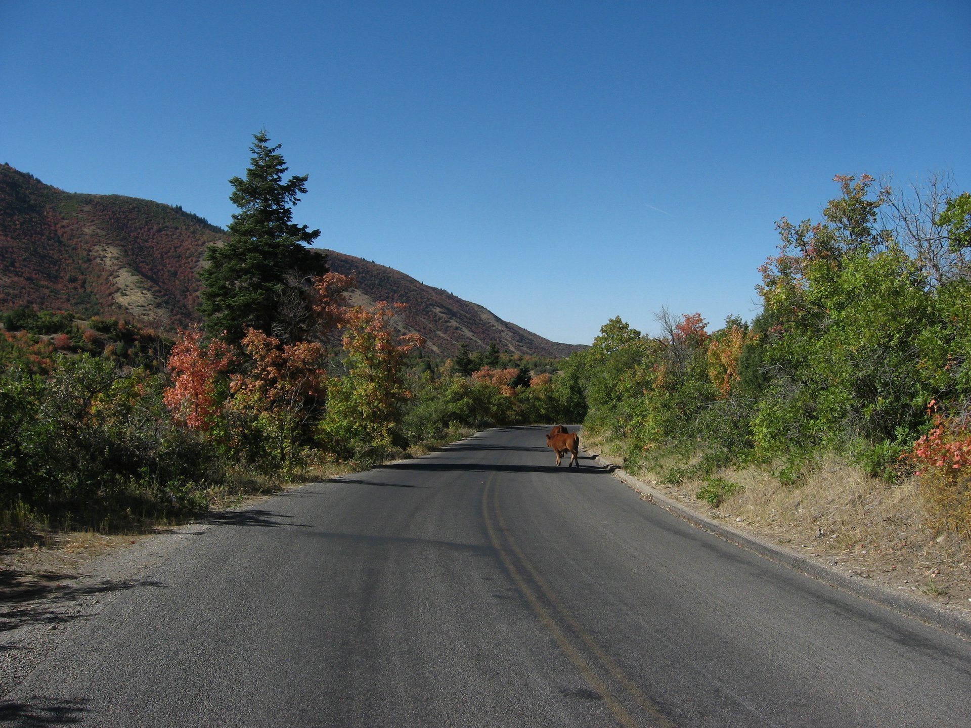Mount Nebo Scenic Byway (Nebo Loop) in Utah 2020 - Best Time