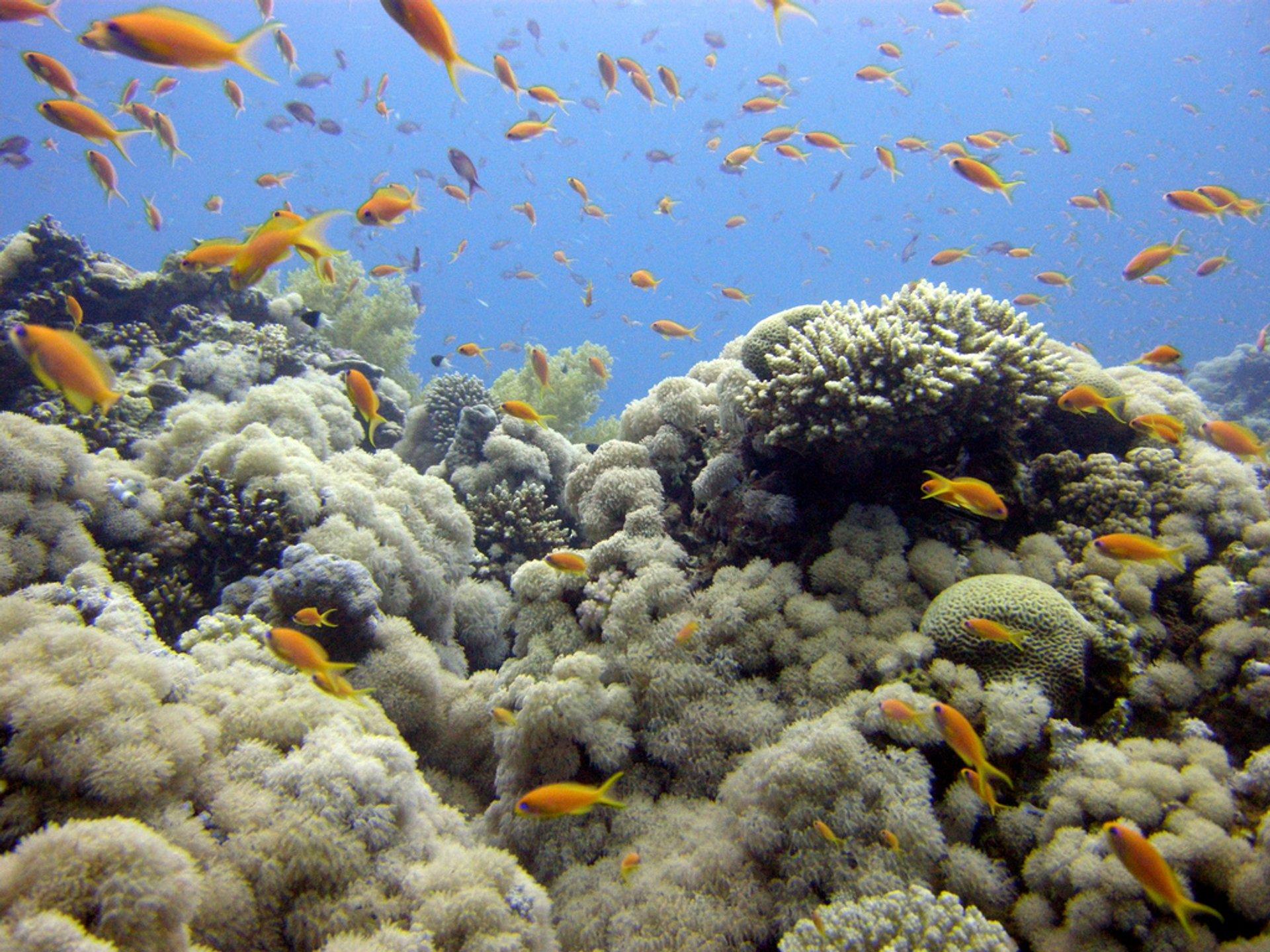 Best time for Aqaba Diving in Jordan