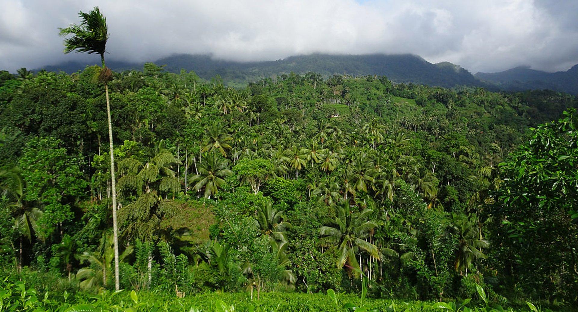 Sinharaja Rainforest in Sri Lanka - Best Season 2020