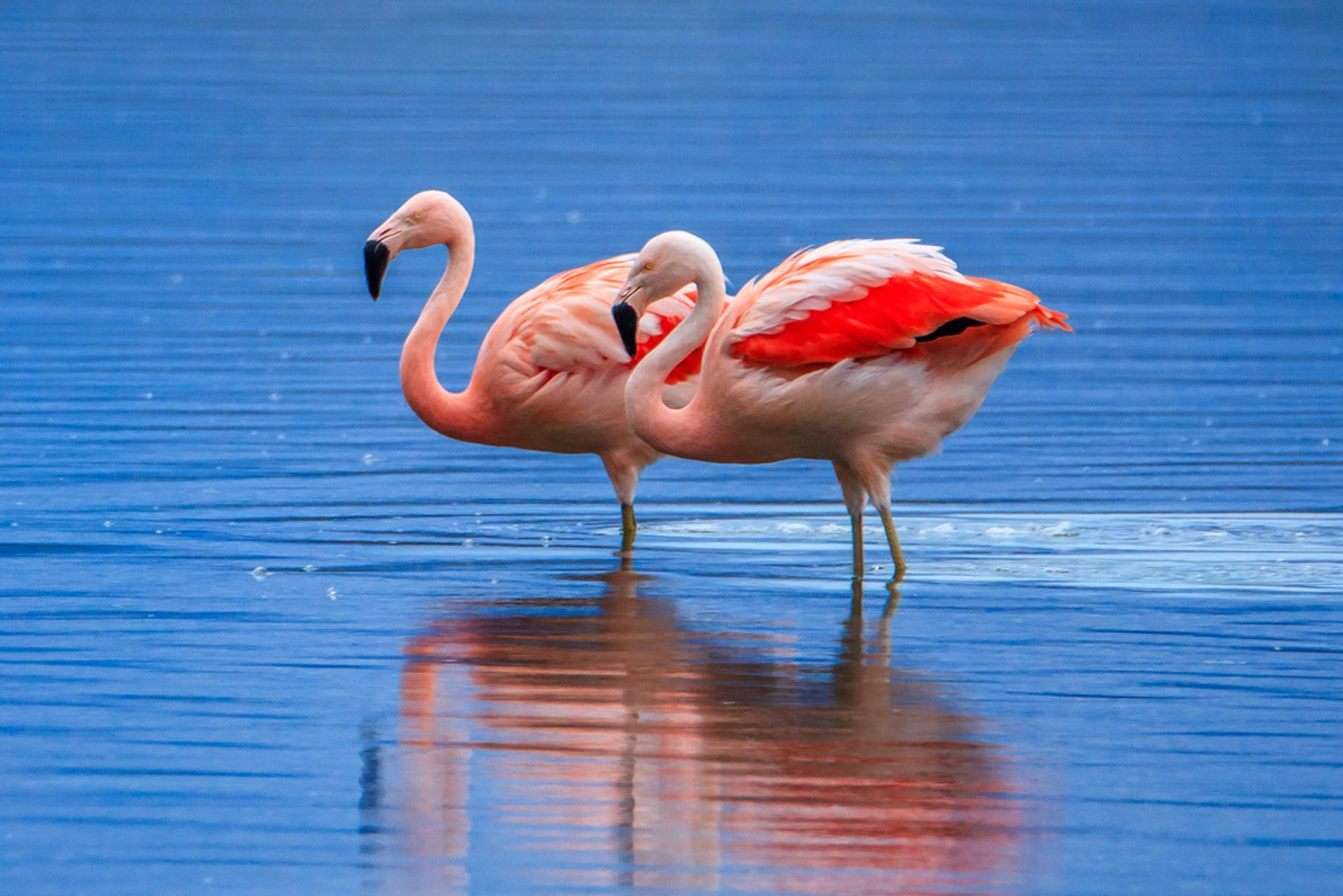 Flamingo Watching in Argentina 2019 - Best Time