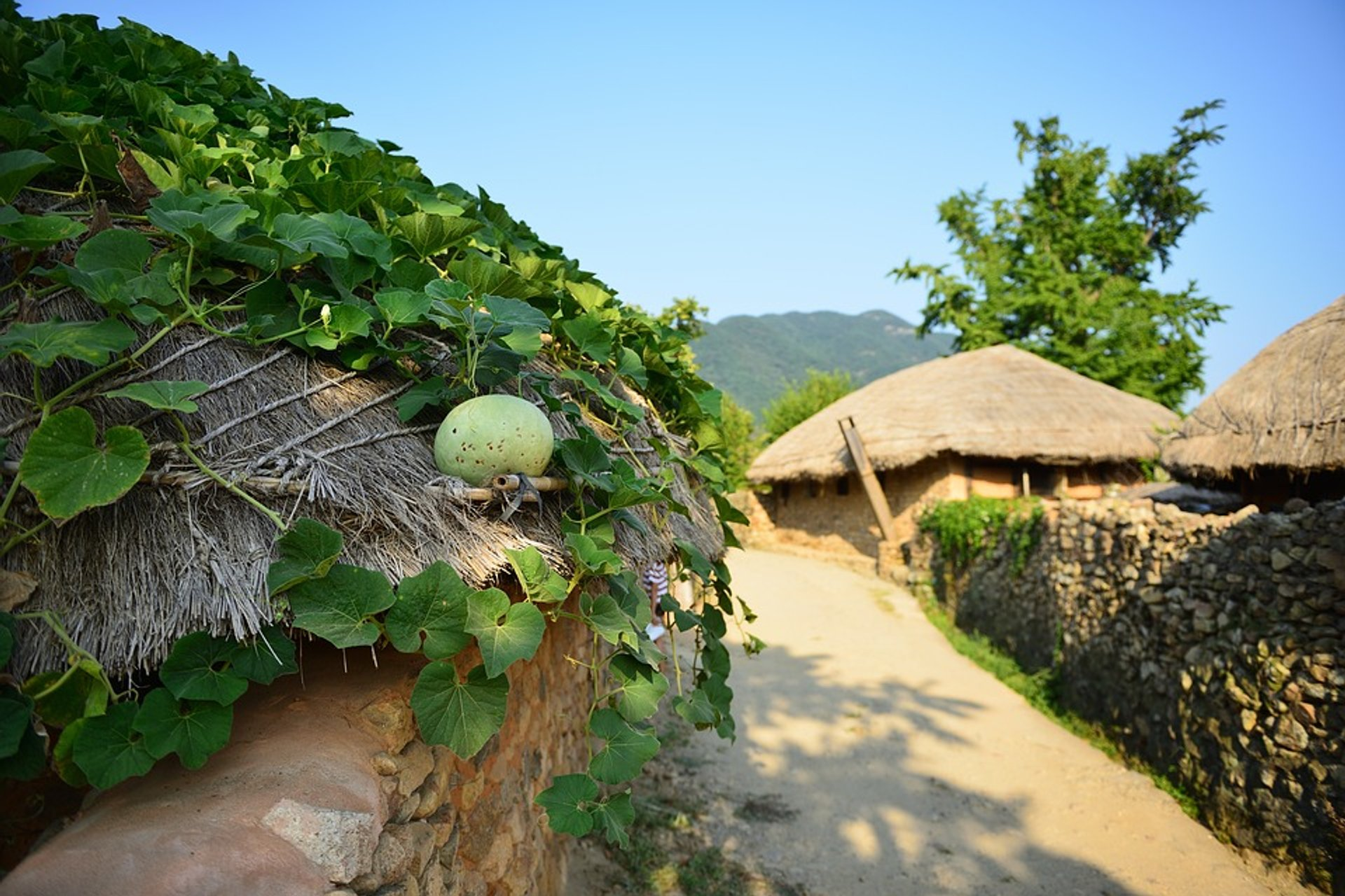 Traditional Villages (Agricultural Season) in South Korea 2020 - Best Time