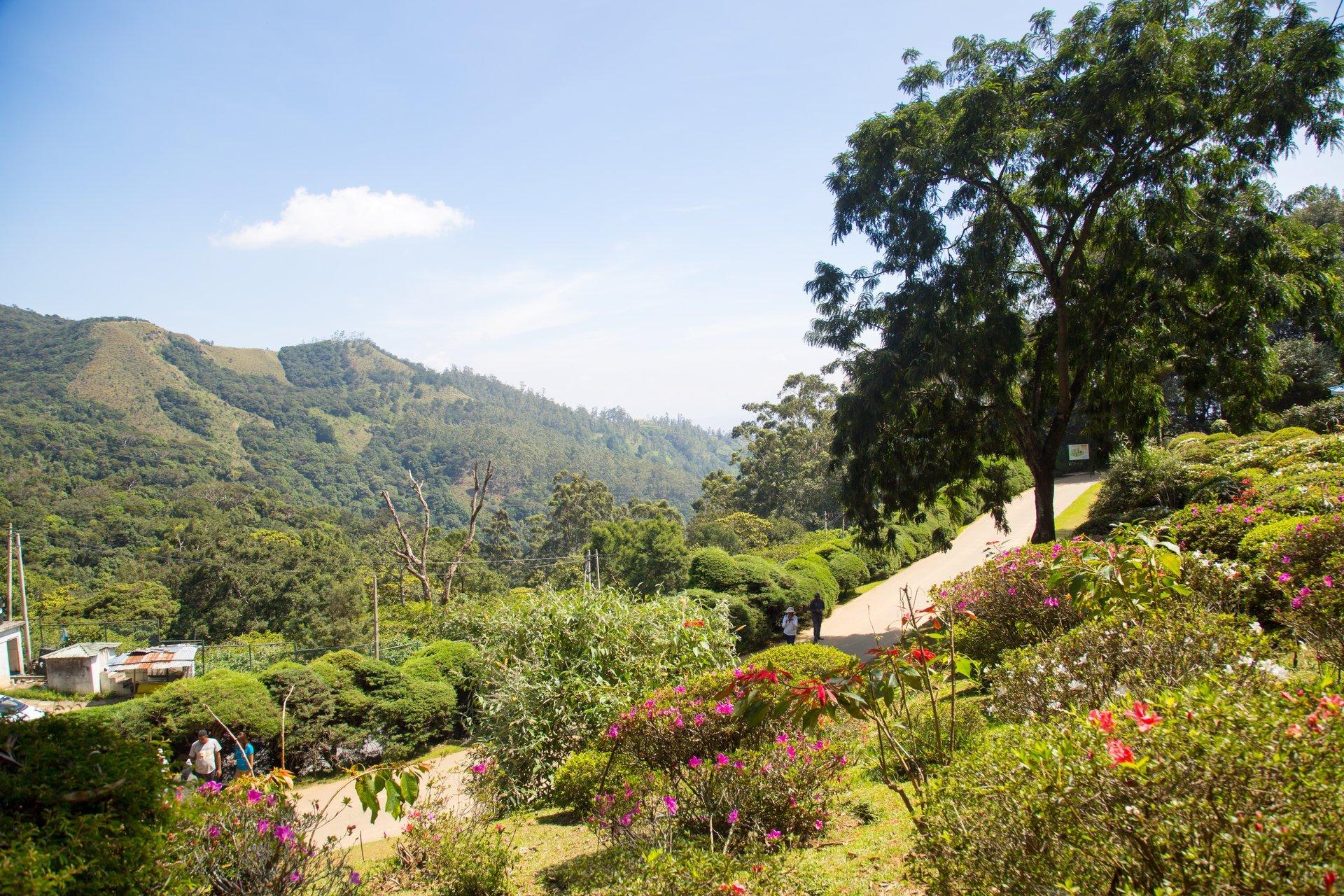 Hakgala Botanical Gardens in Sri Lanka 2020 - Best Time