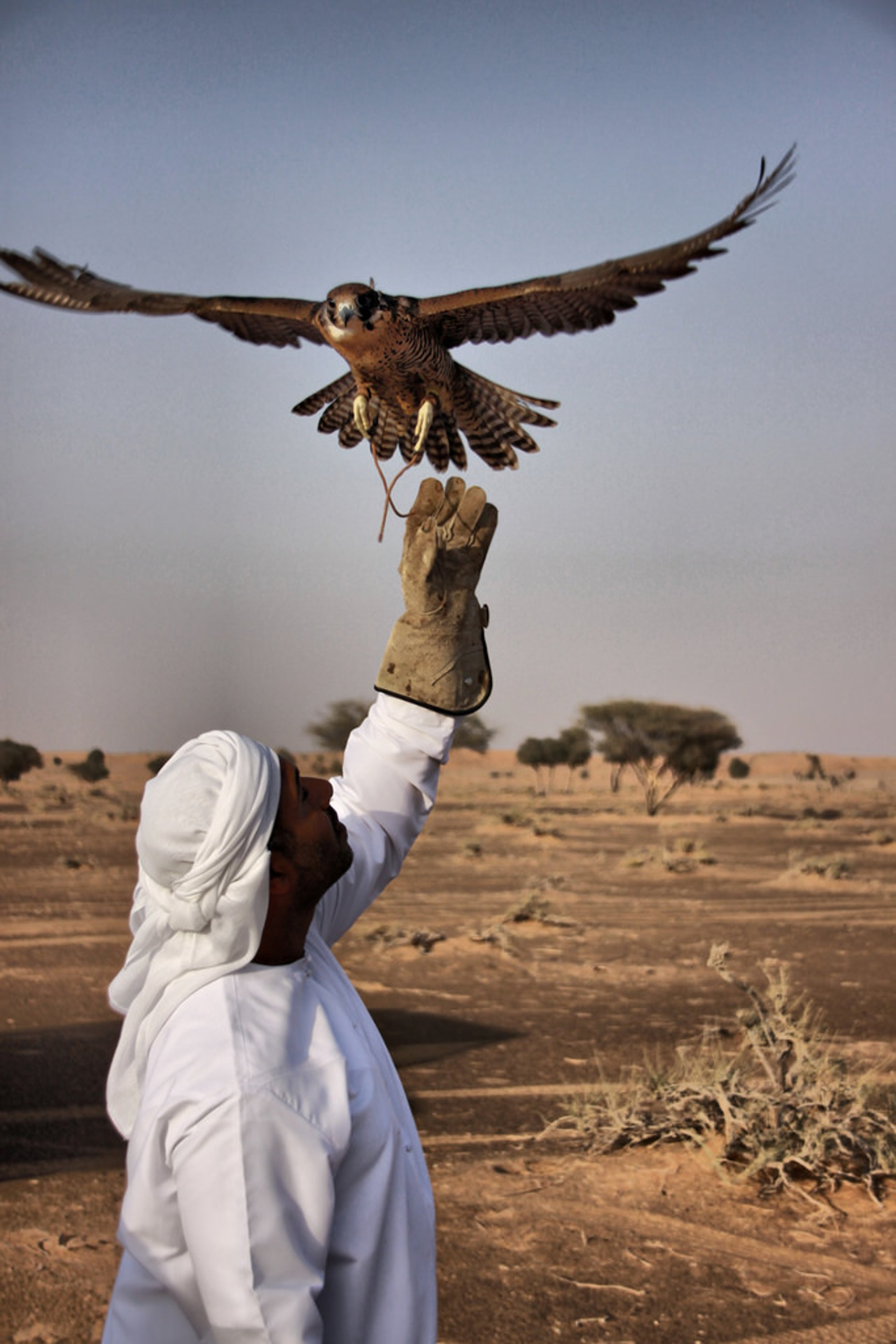 Falconry Experience in Jordan - Best Season