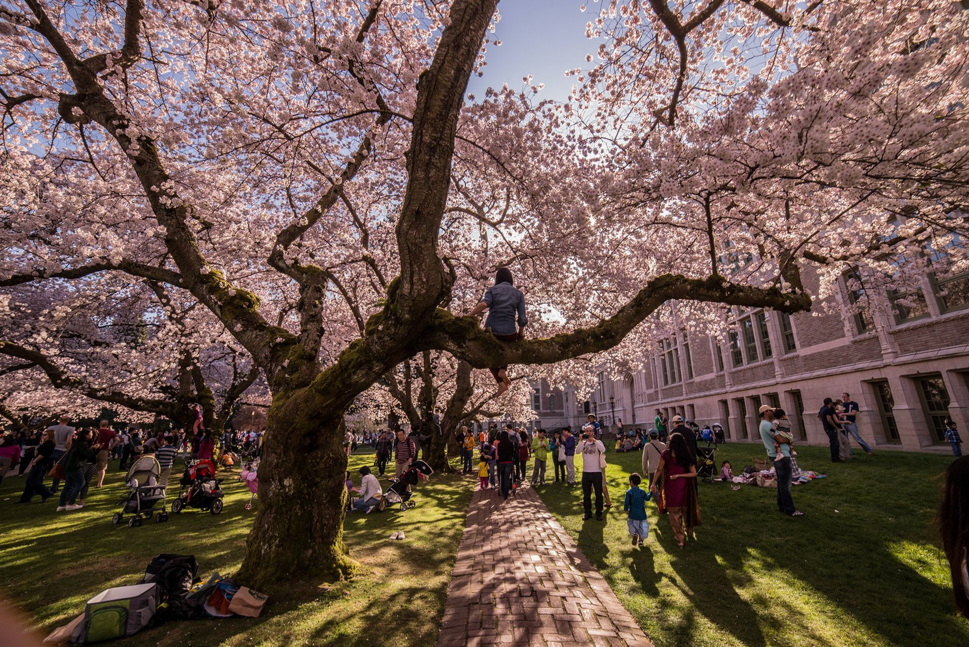 Cherry Blossoms in Washington, D.C. - Best Season 2020