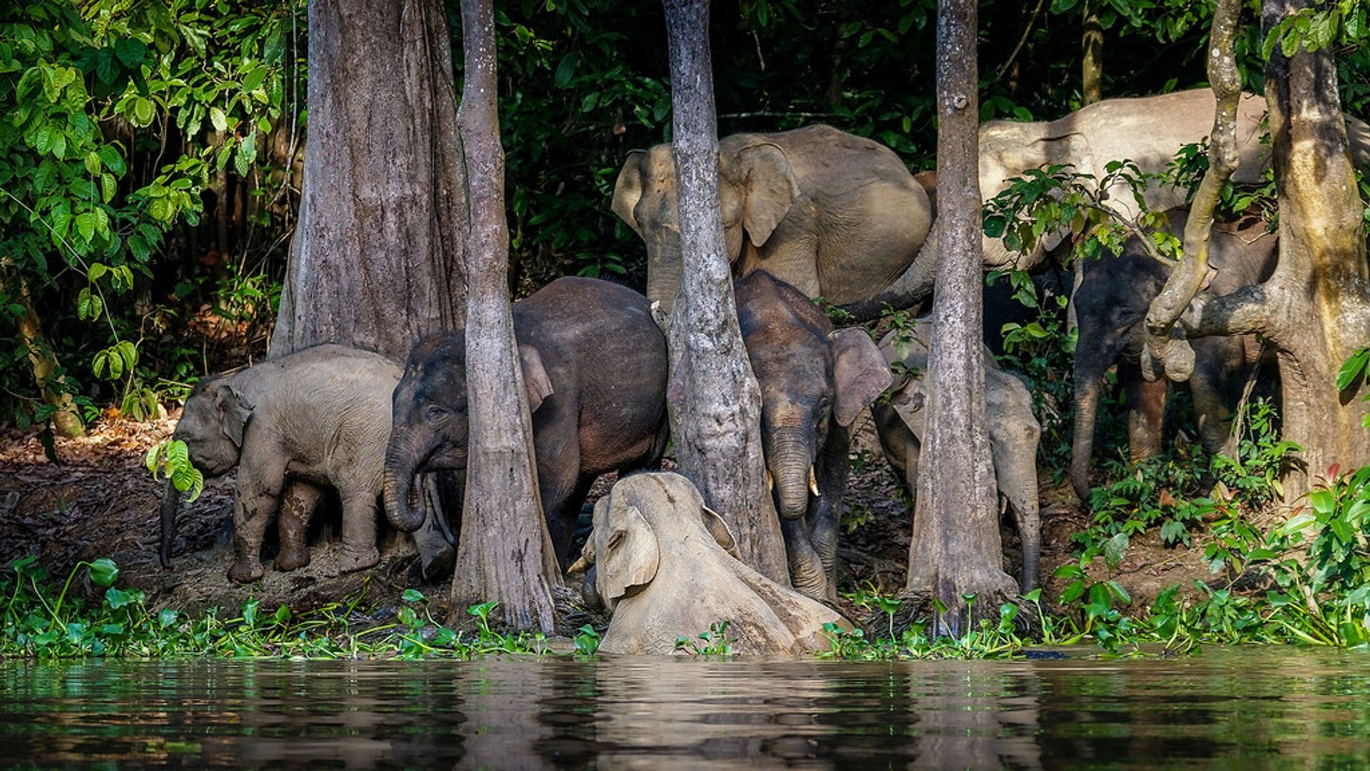 A whole family was coming for a refreshment to the Kinabatangan river. 2020