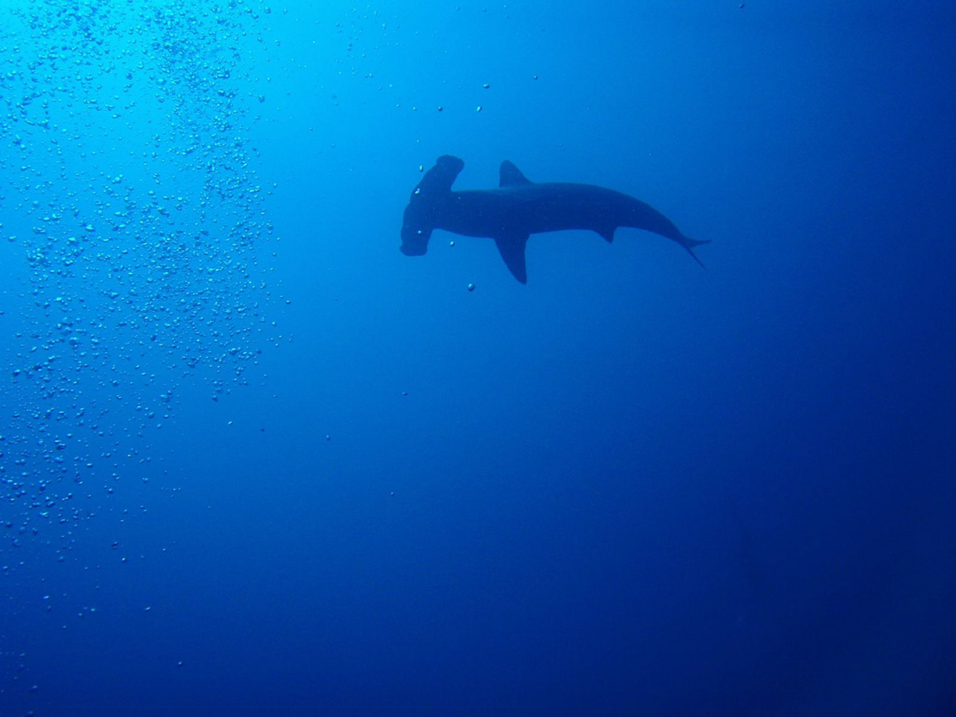 Hammerheads and Manta Season in Galapagos Islands - Best Time
