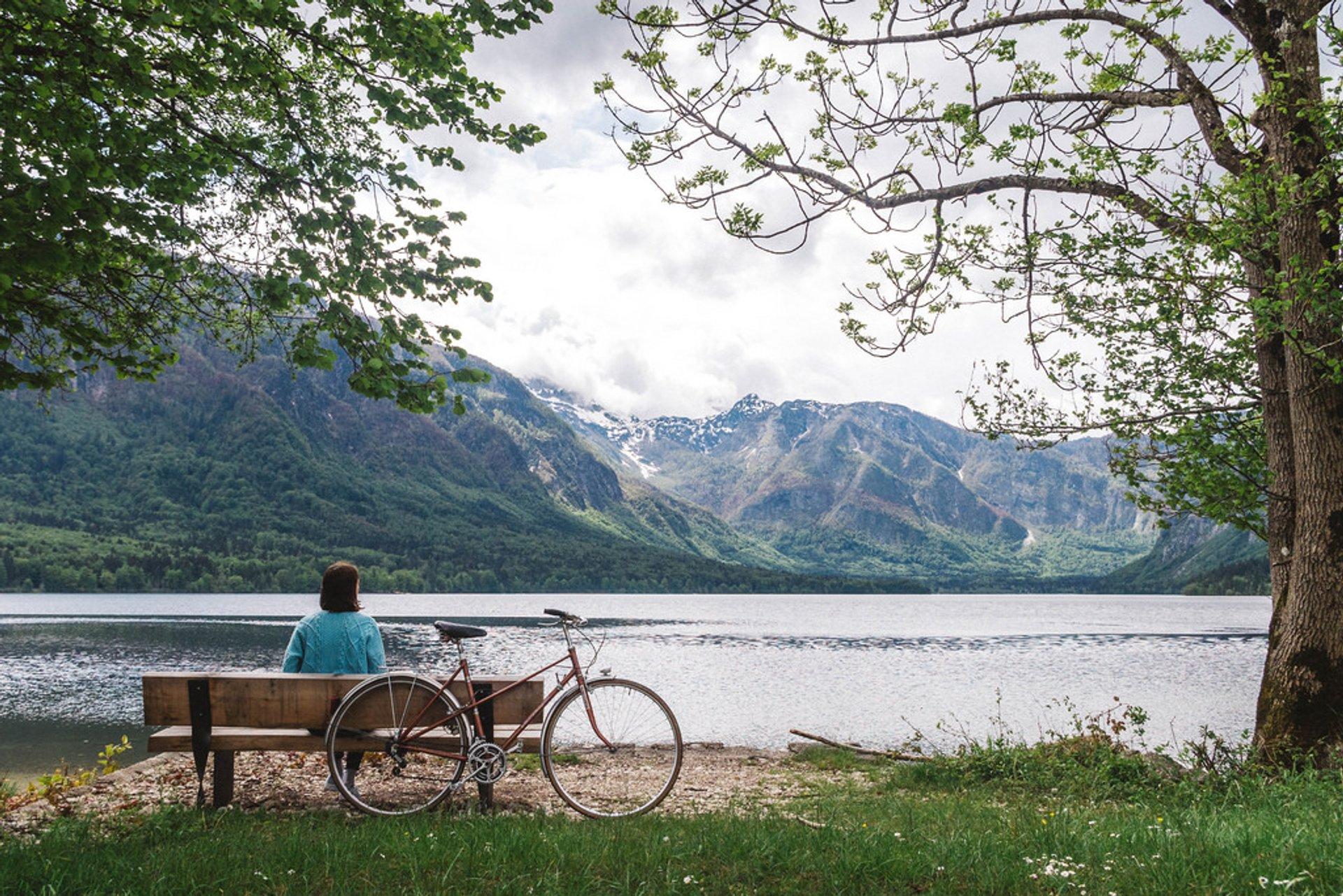 Lake Bohinj 2020