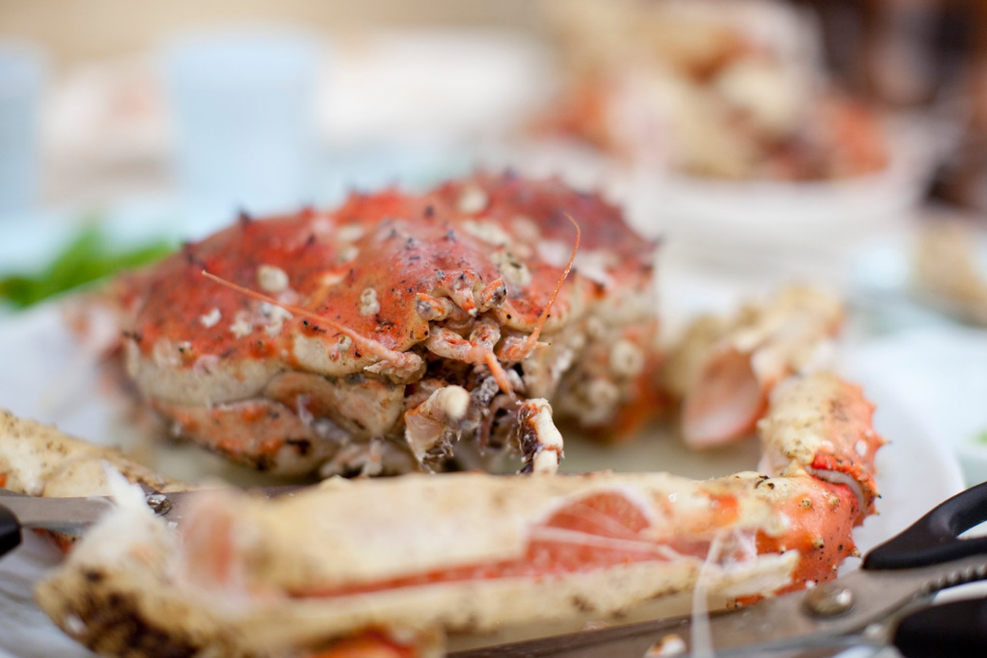Best time for King Crab in Seoul 2020