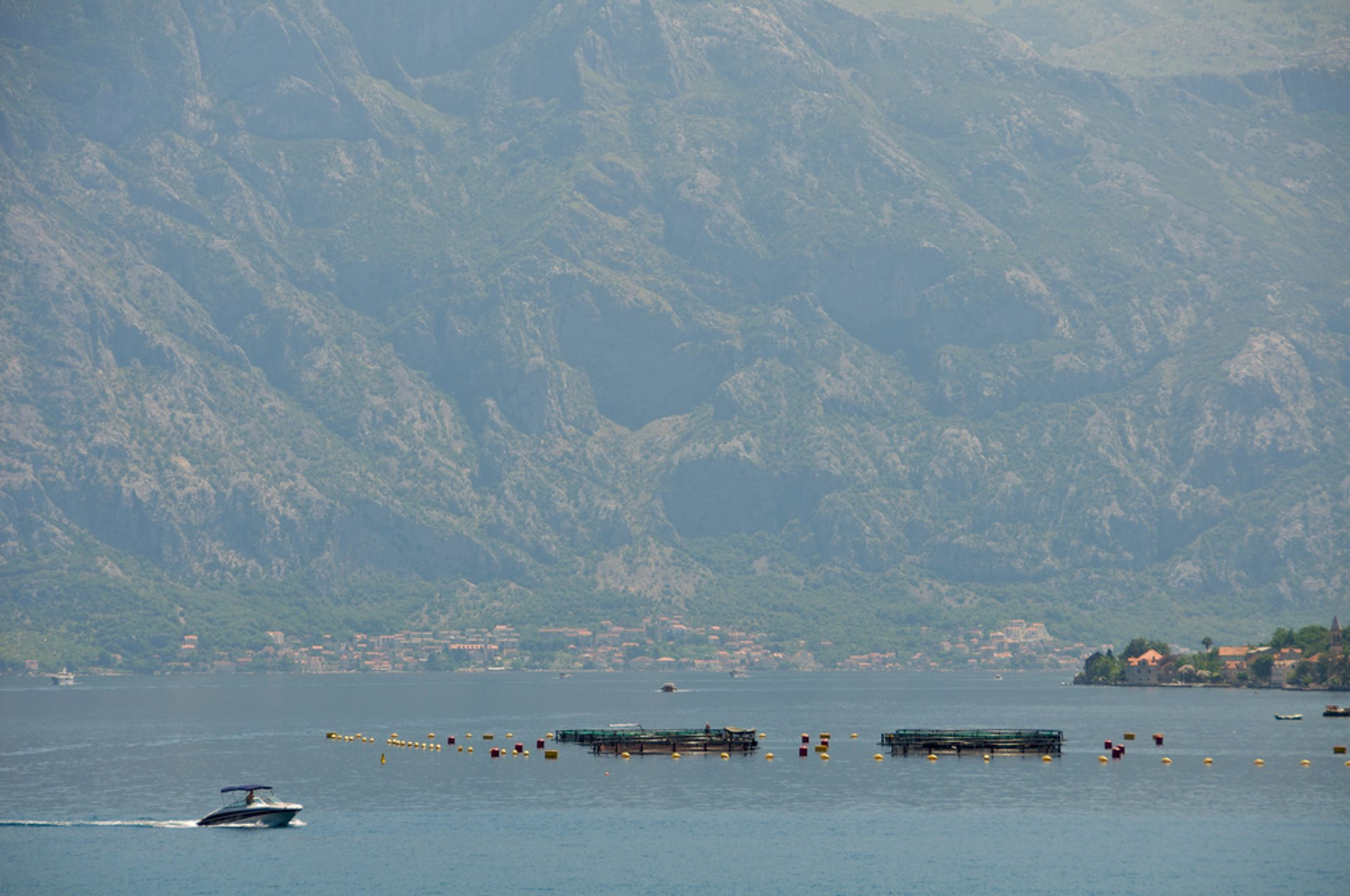 Best time for Mussels Season in Montenegro 2020