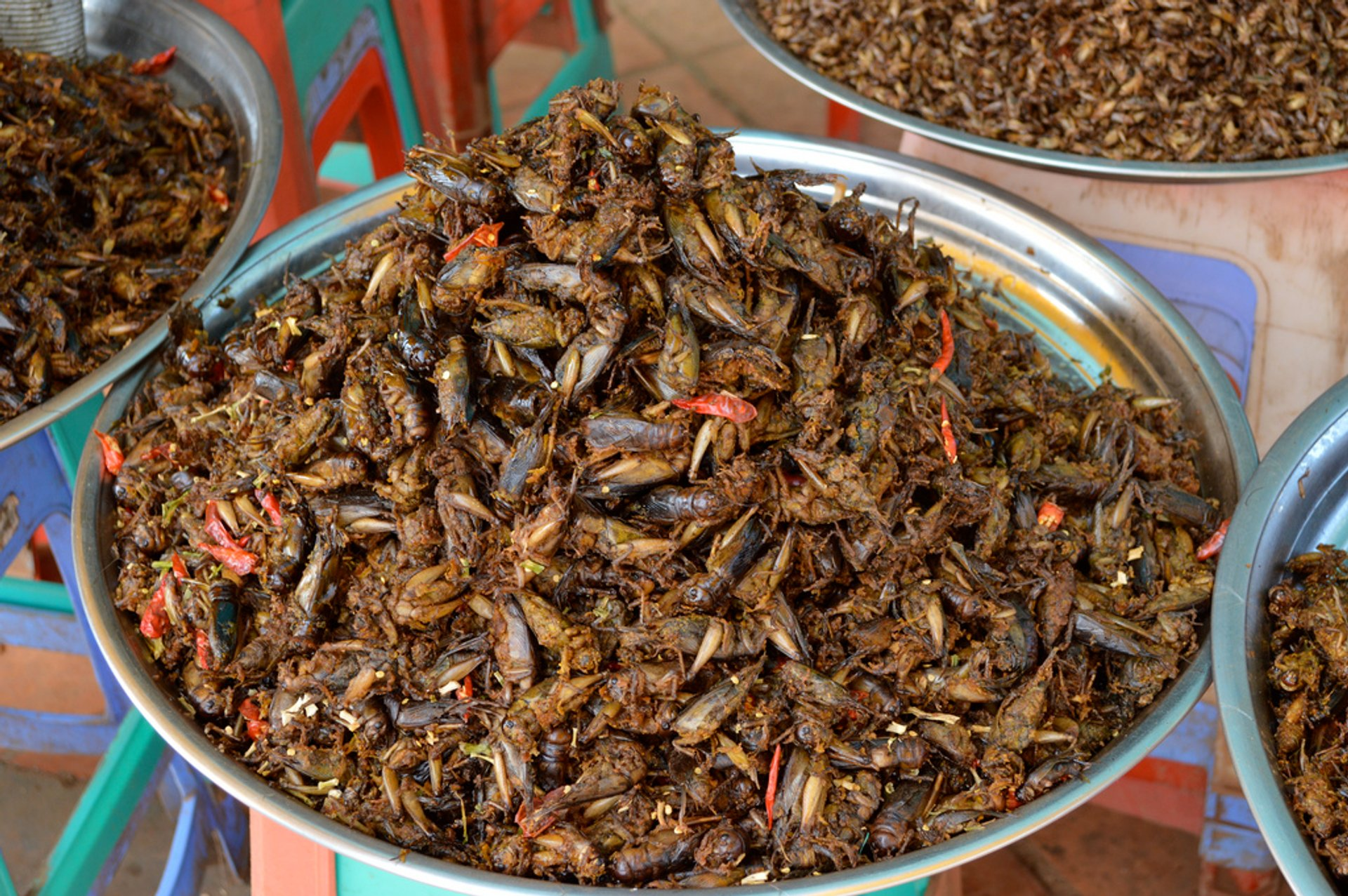 Eat Some Bugs! in Cambodia - Best Season 2020