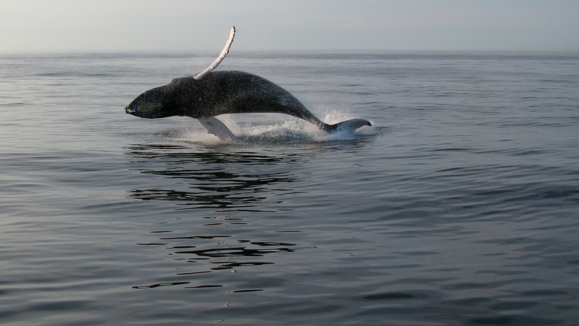Best time to see Whale Watching in Maine 2020