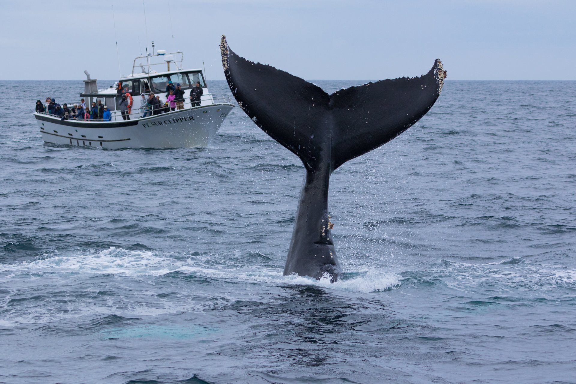 Monterey Bay Whale Watch tour 2020
