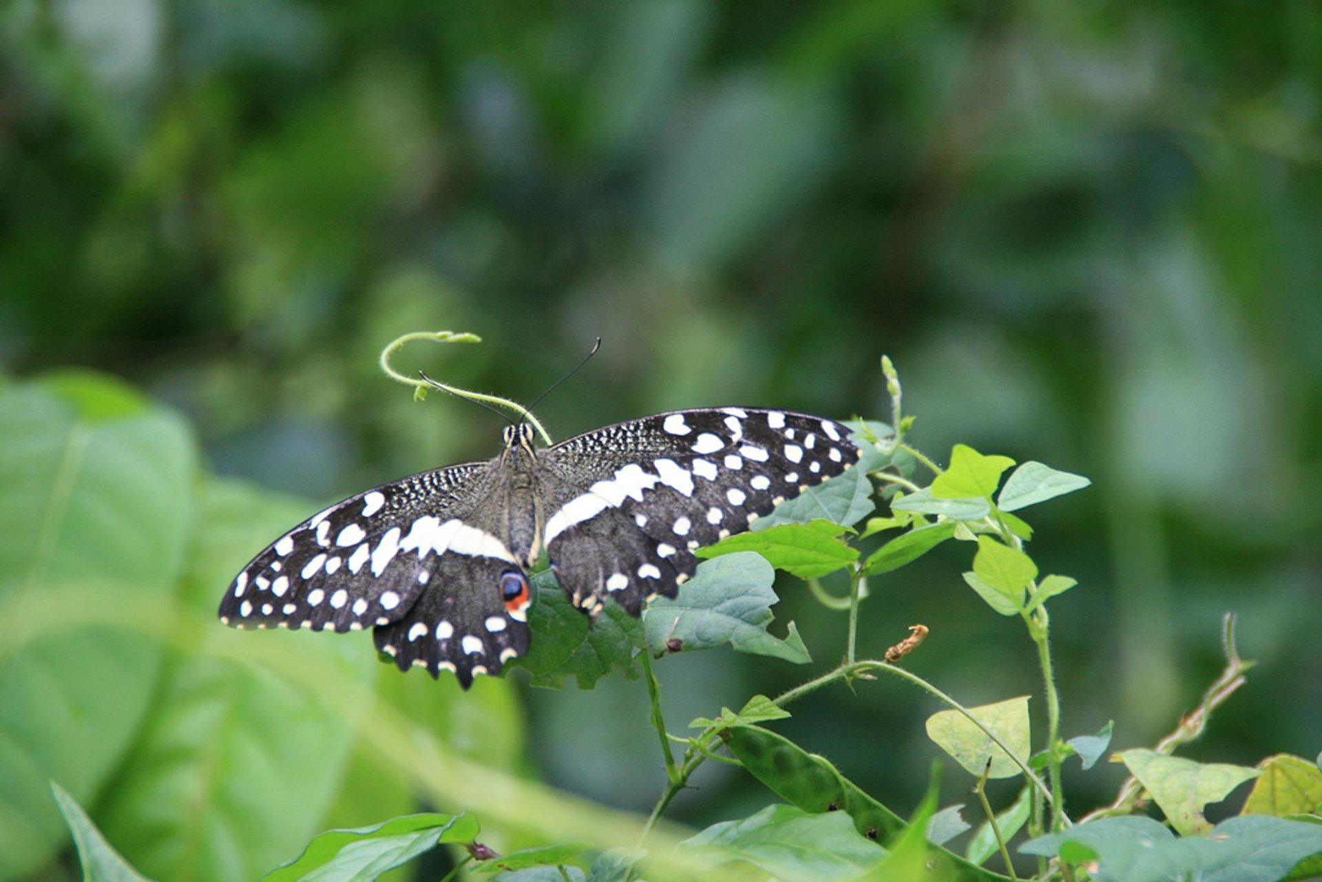Butterflies in Zanzibar - Best Season 2020