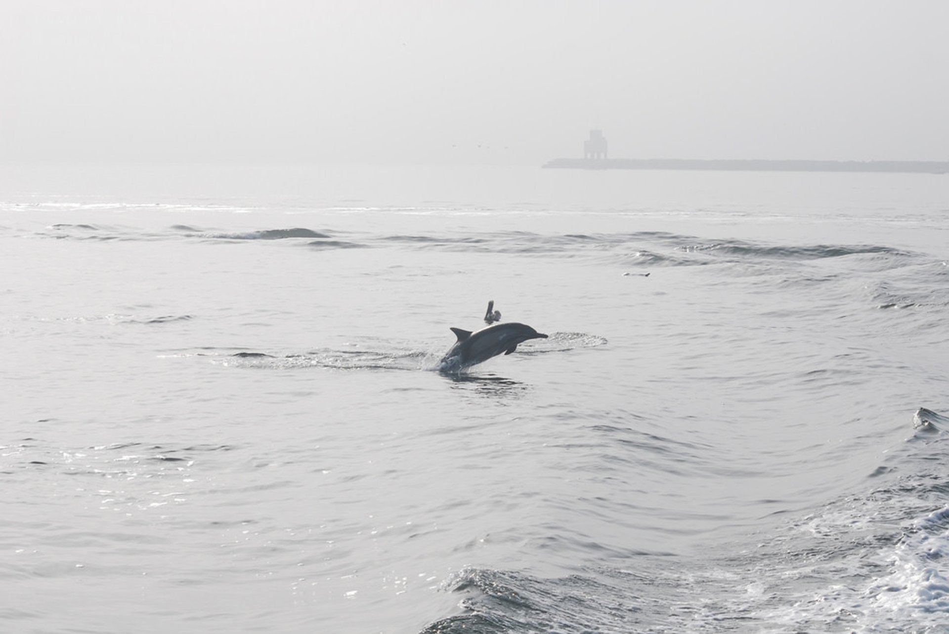 Whale and Dolphin Watching  in Los Angeles - Best Season 2020