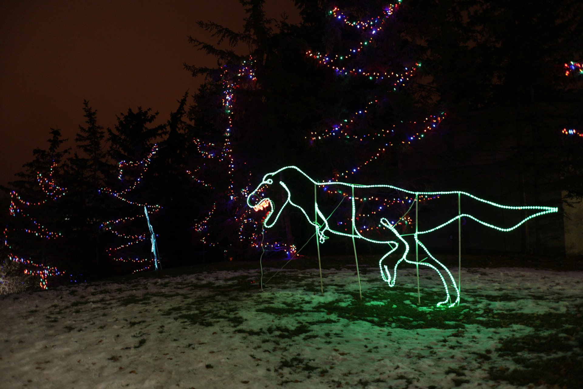 Zoo Lights in Calgary - Best Season 2020