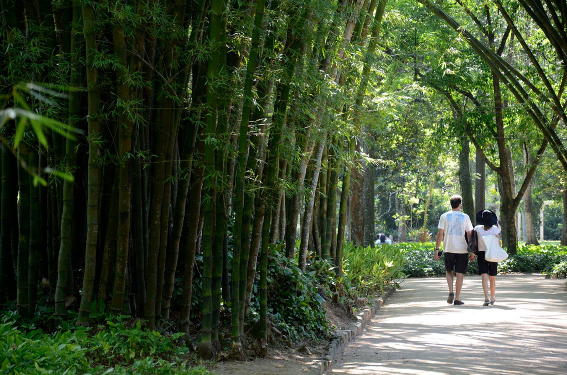 Best time for Botanical Garden or Jardim Botânico in Rio de Janeiro 2020