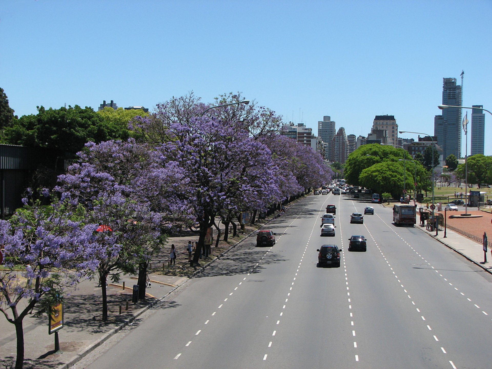 Best time to see Jacaranda Bloom in Buenos Aires 2019