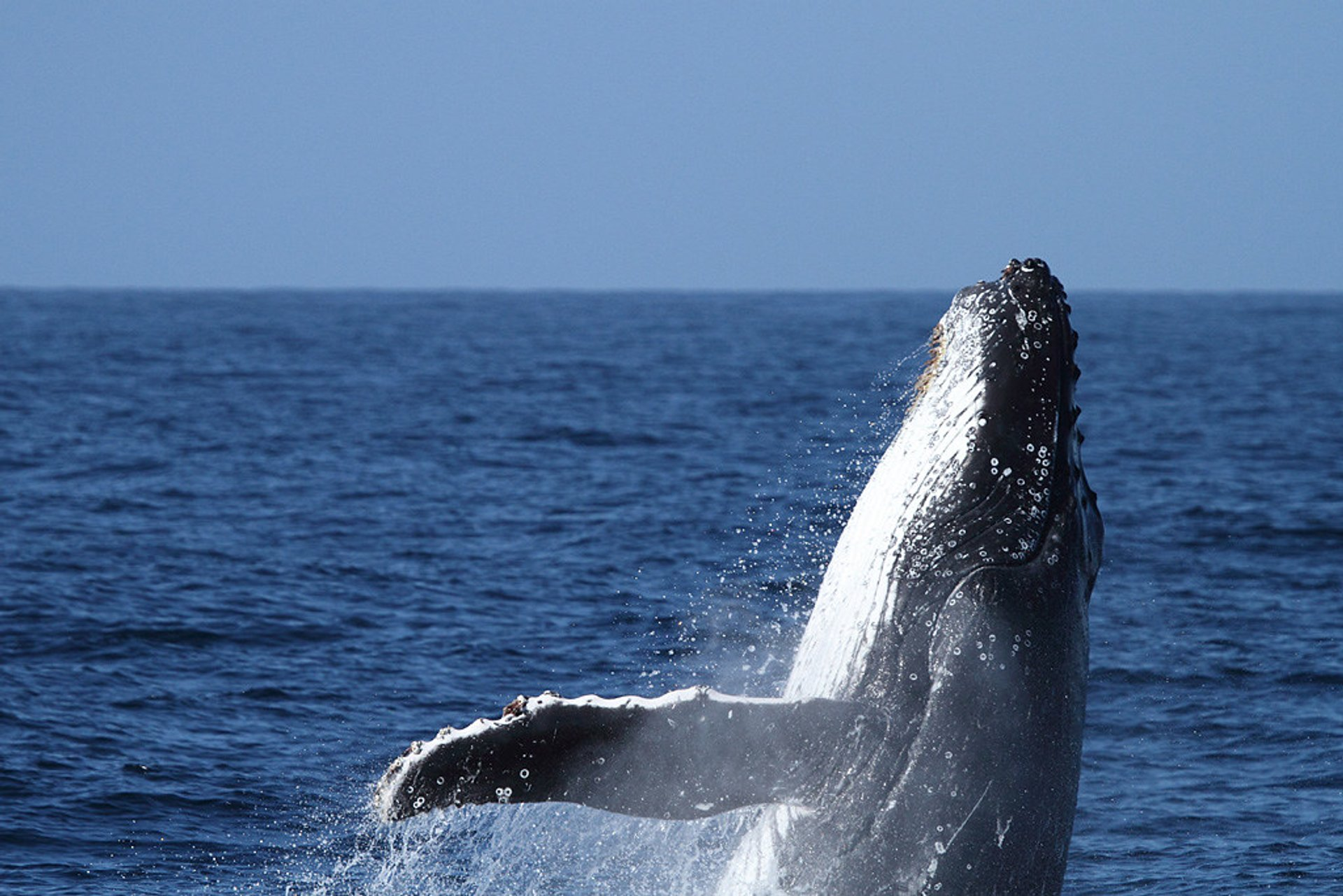 Whale & Dolphin Watching in Sydney 2020 - Best Time