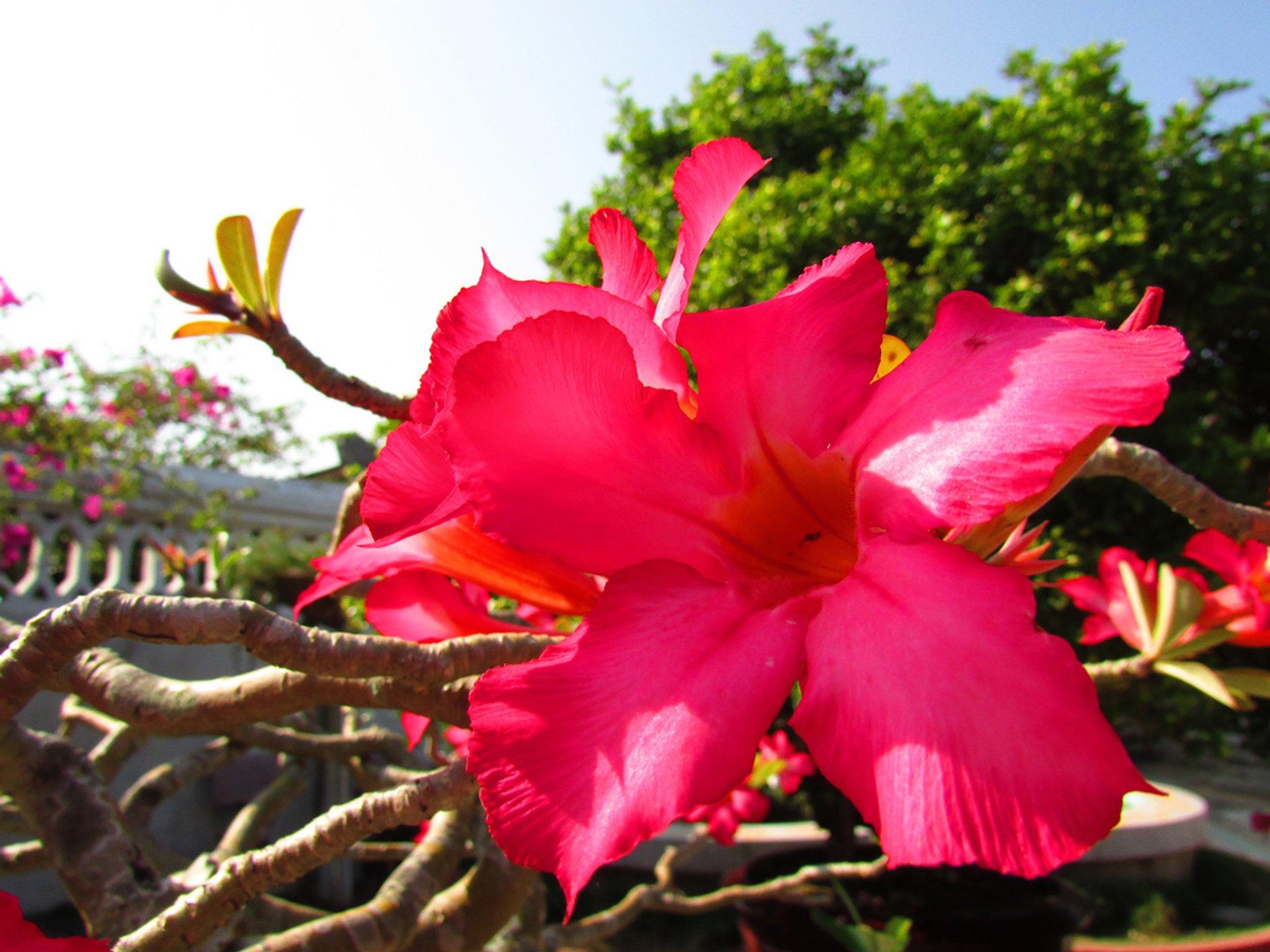 Mekong Delta Flower Season in Vietnam - Best Season