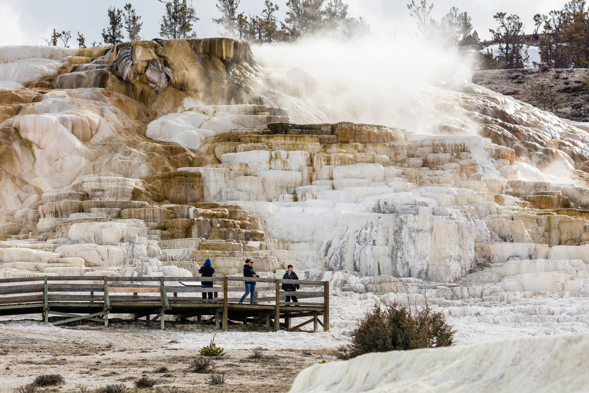 Mammoth Hot Springs in Yellowstone National Park 2019 - Best Time
