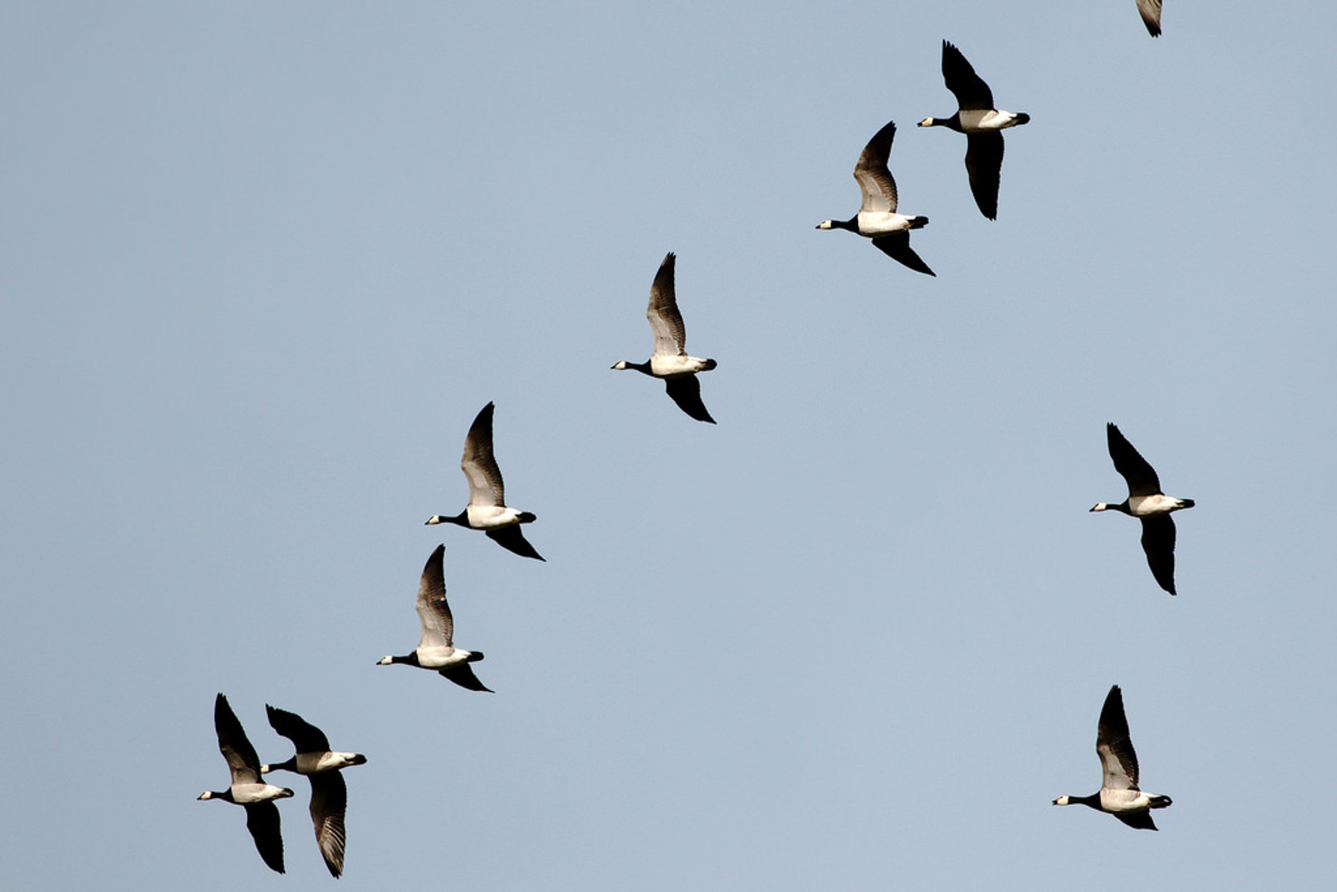 Best time to see Migrating Birds at Falsterbo in Sweden