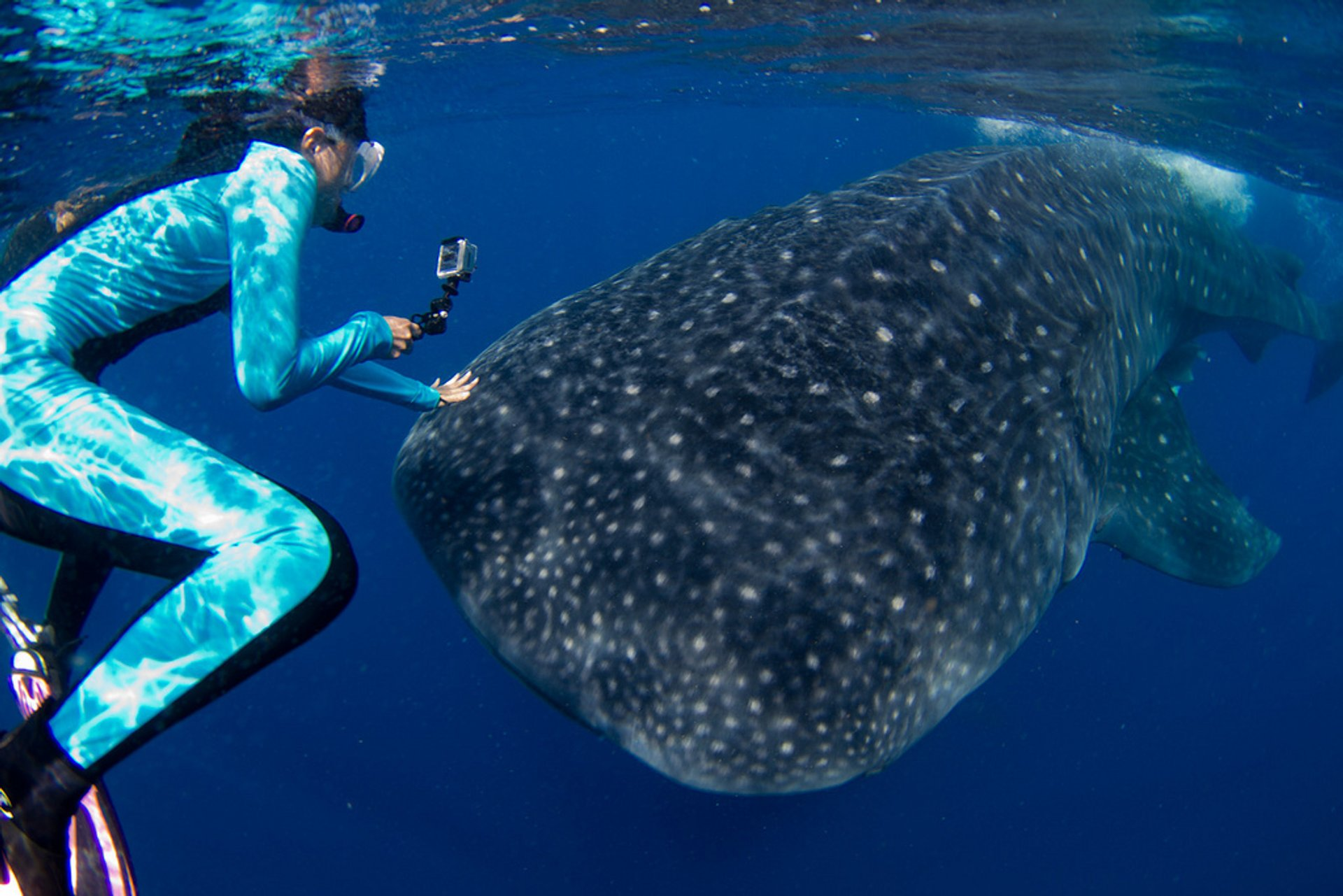 Swimming with Whale Sharks in Mexico - Best Season 2019