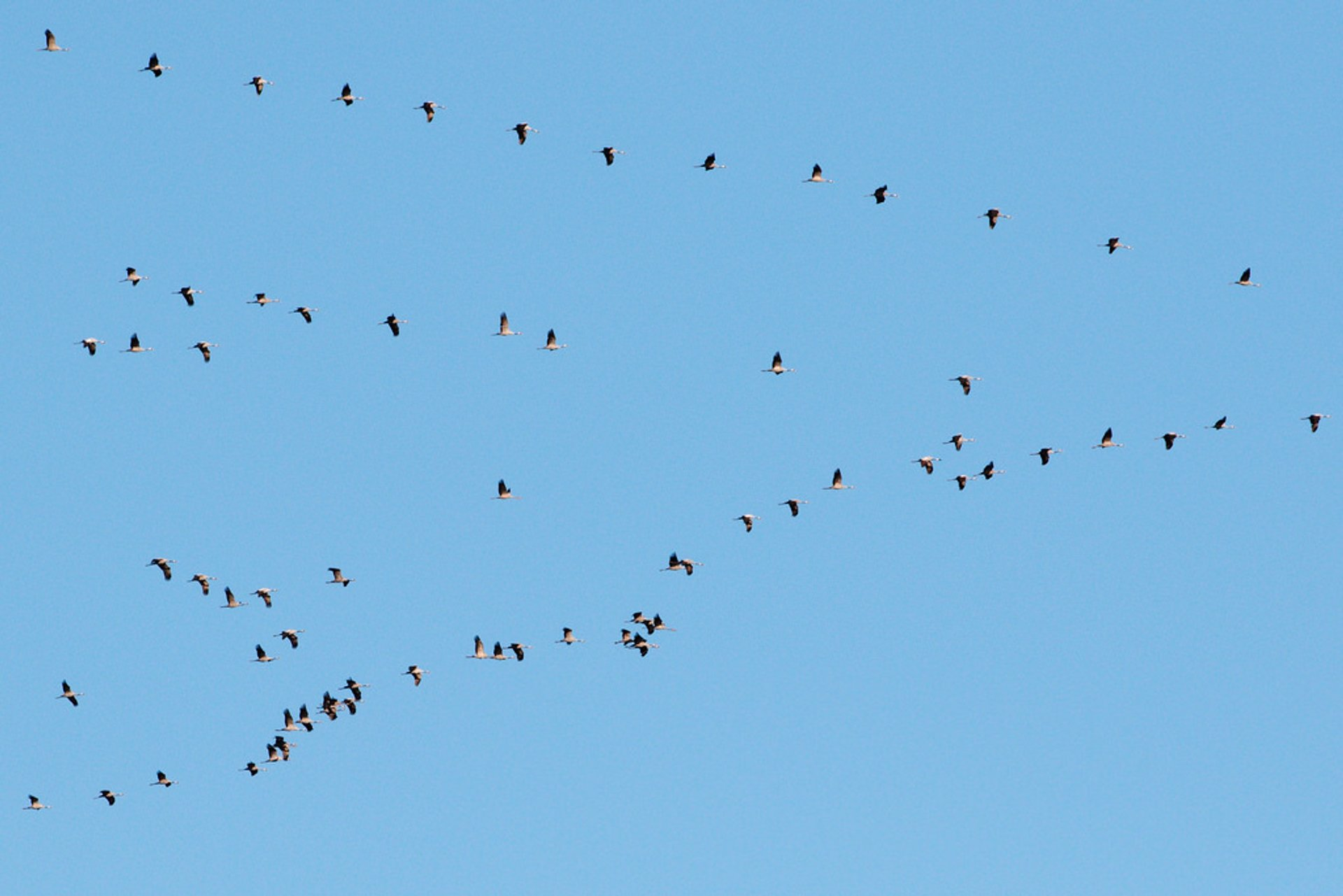 Best time for Migrating Birds at Falsterbo in Sweden