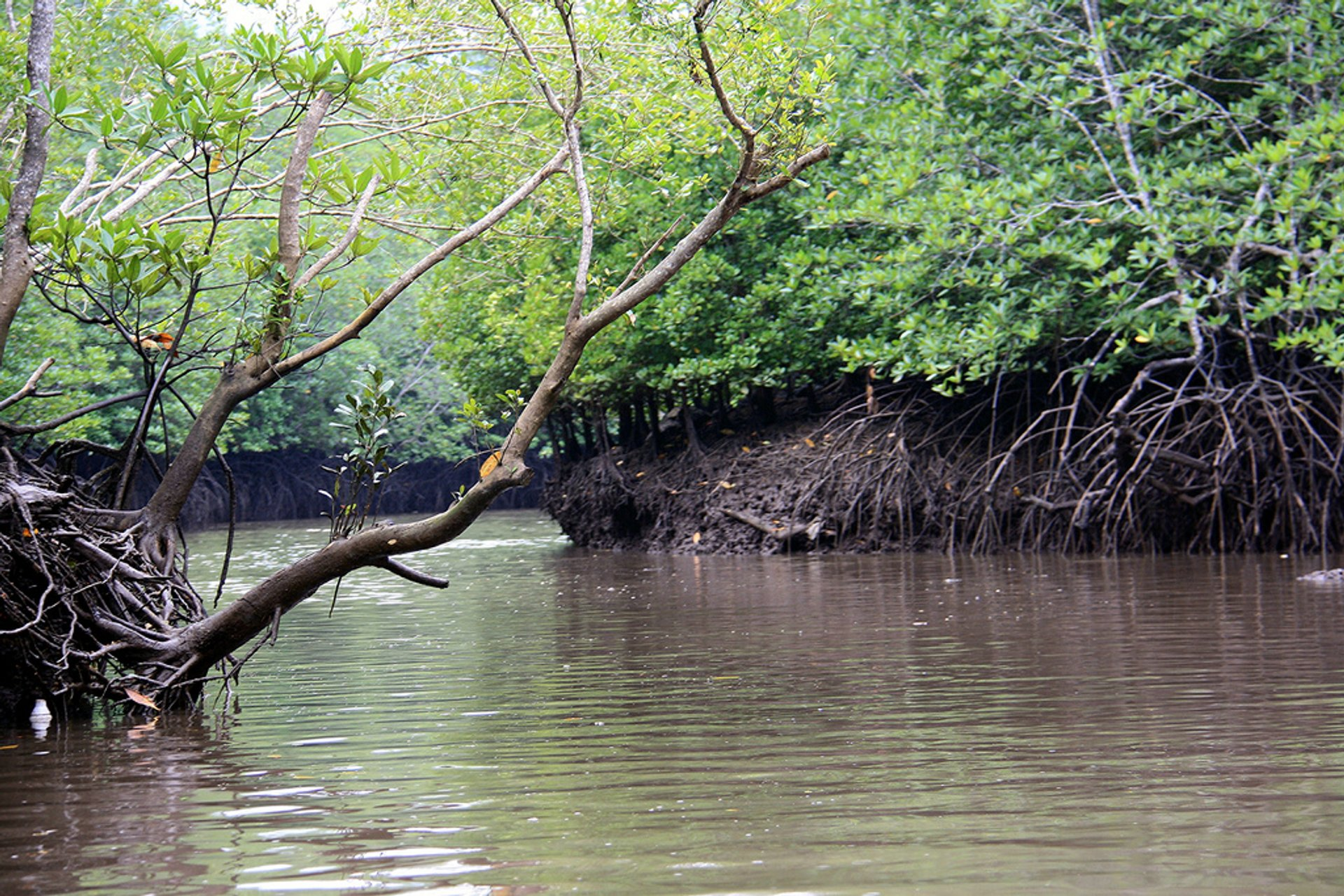 Mangroves of Langkawi