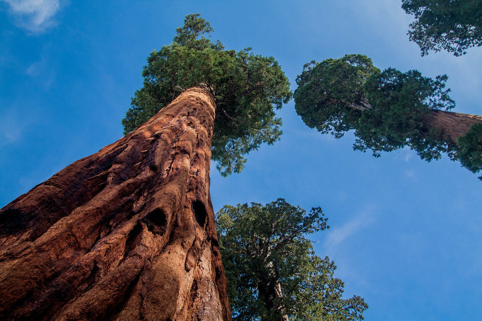 Sequoia National Park  in California 2020 - Best Time
