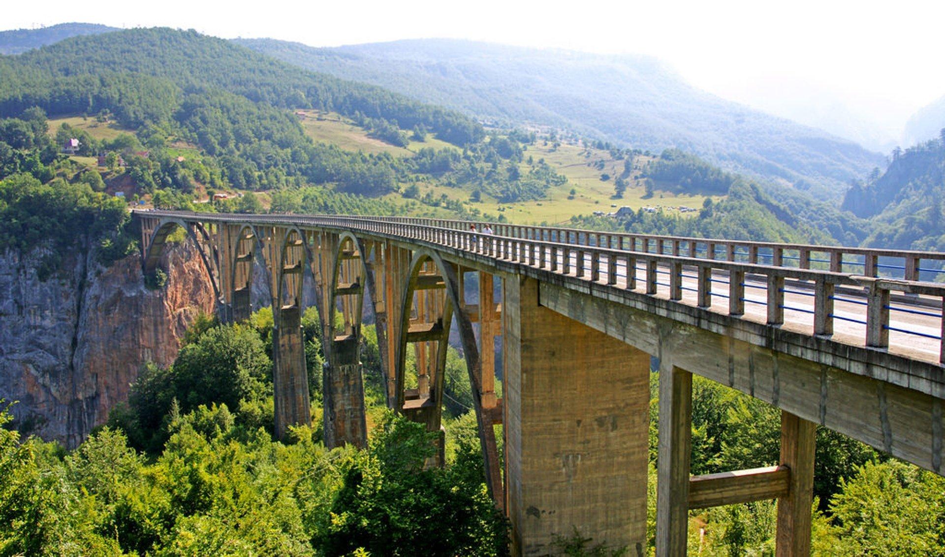 Tara bridge 2020