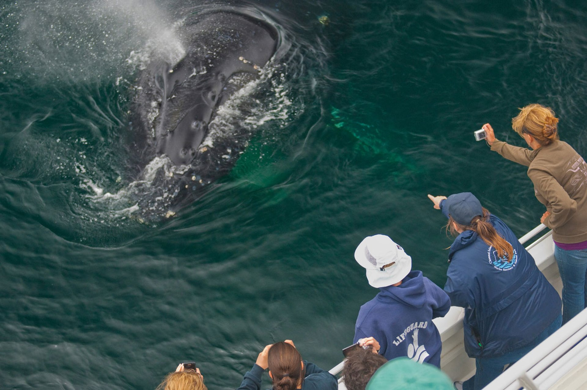 Channel Islands National Marine Sanctuary Naturalist Corps volunteers support a whale watching expedition. 2020