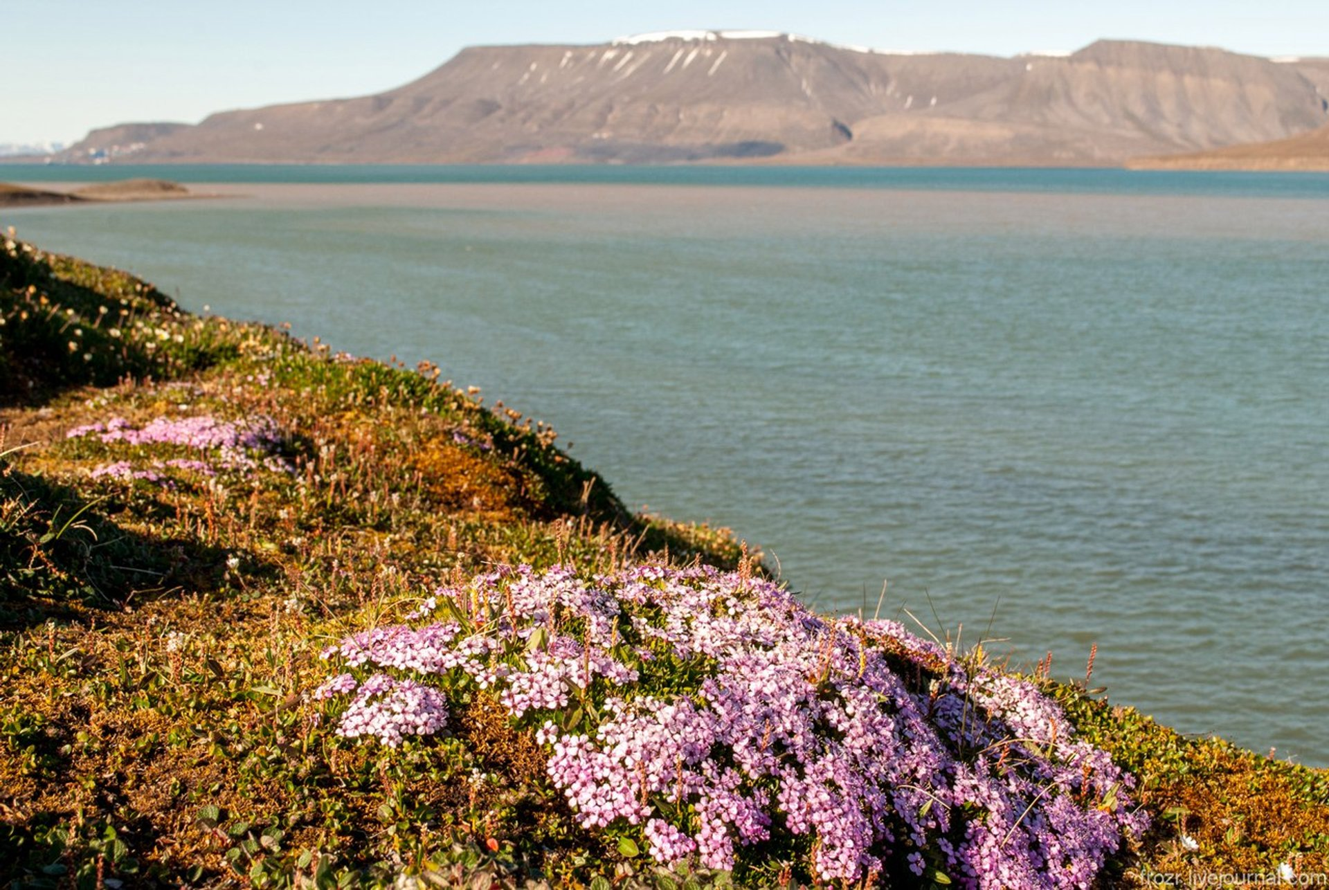 Best time to see Wild Flowers in Norway